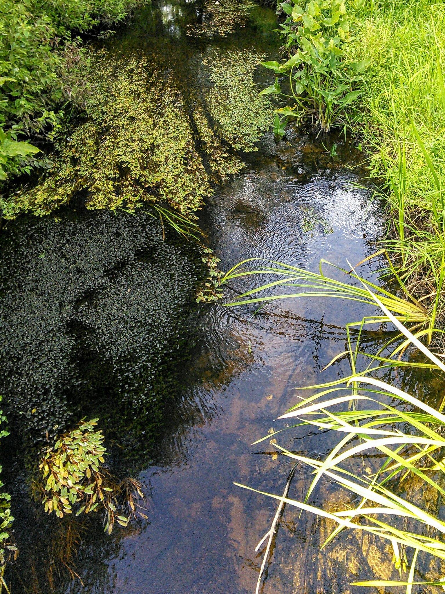 Leafy Stream  by Constance Festo Lafond