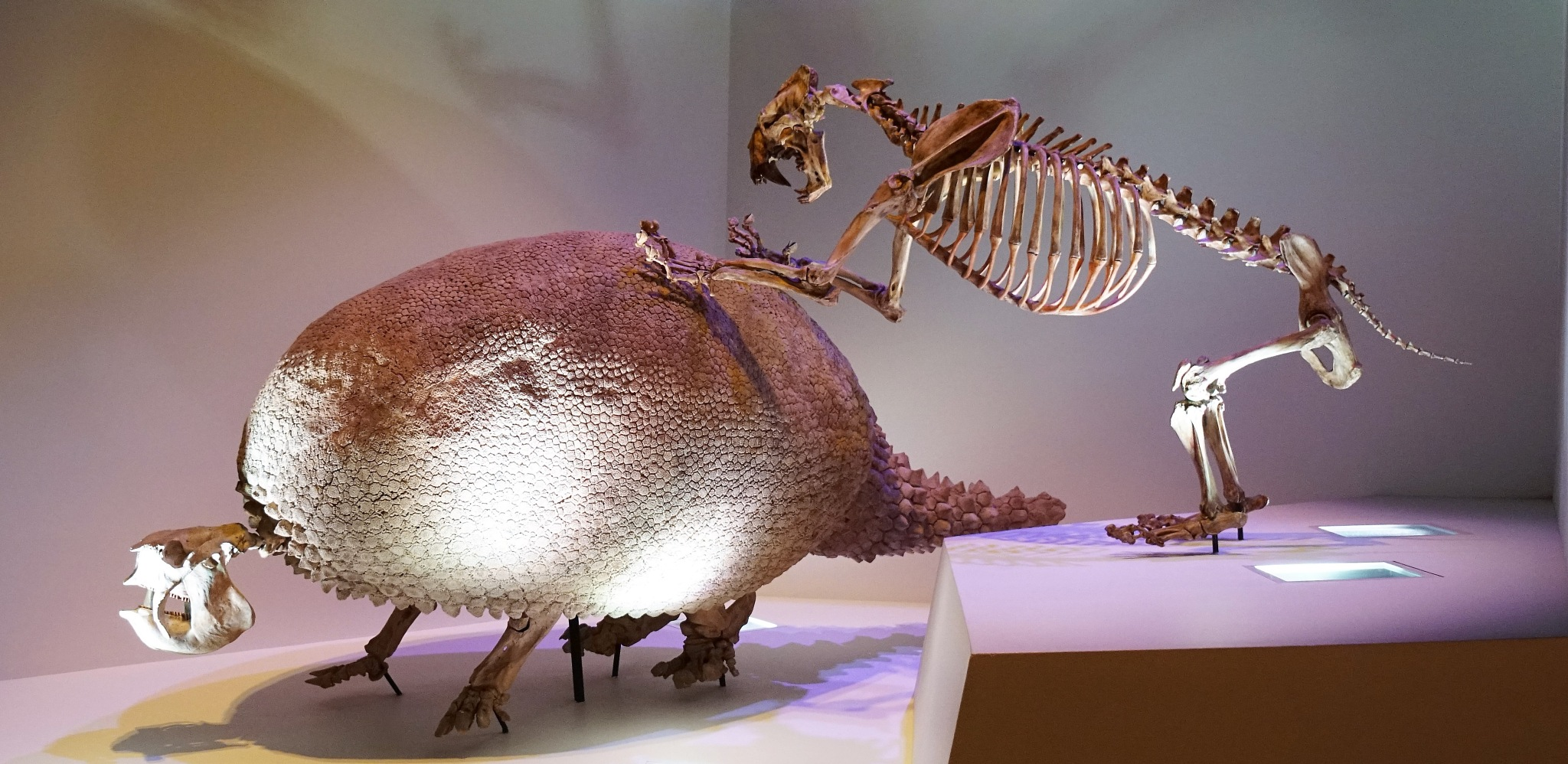 Giant Pre-historic Armadillo  by MichaelDorsey