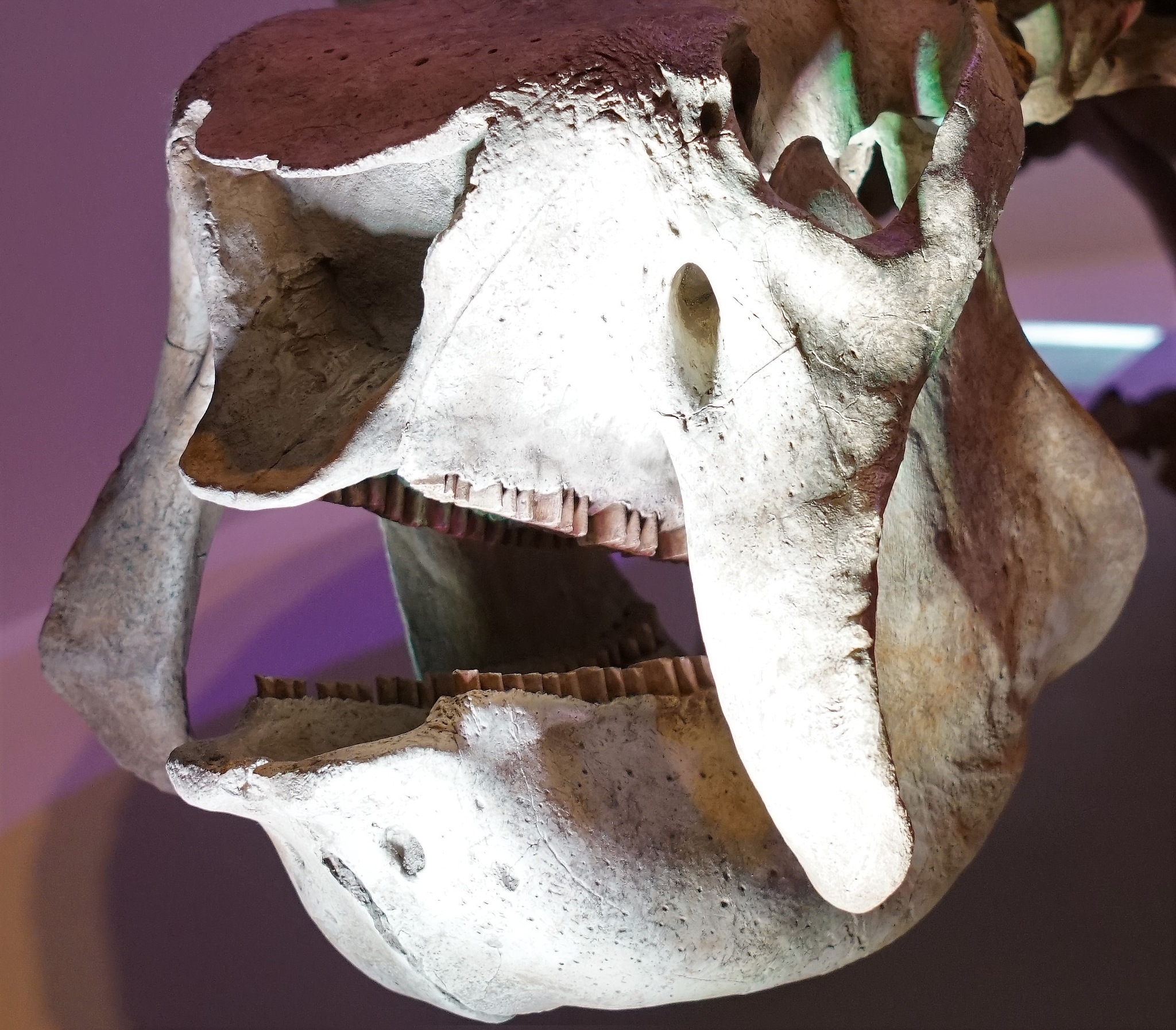Giant Pre-historic Armadillo Chomp-Per's   by MichaelDorsey
