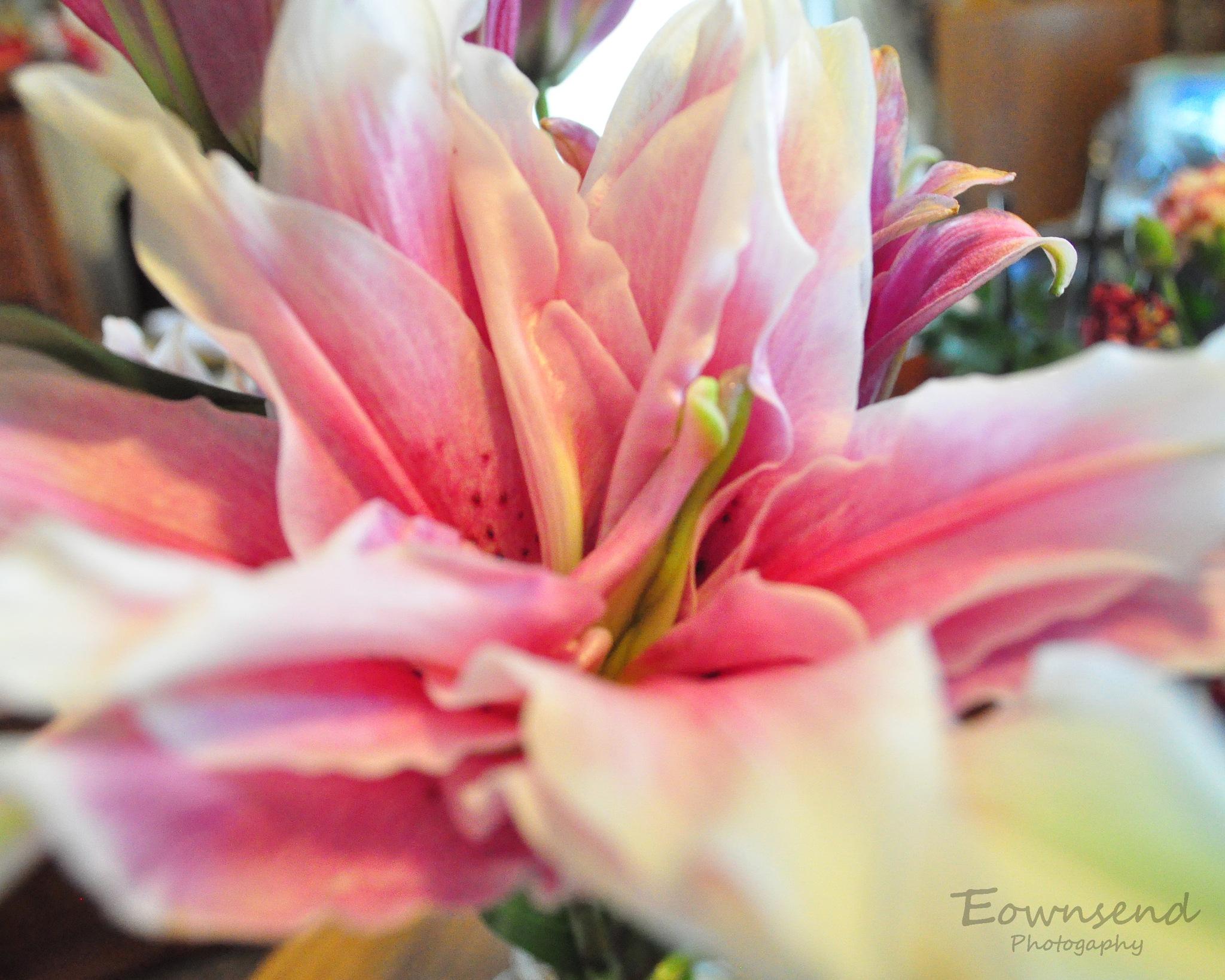 Roselily by Elizabeth C. Townsend