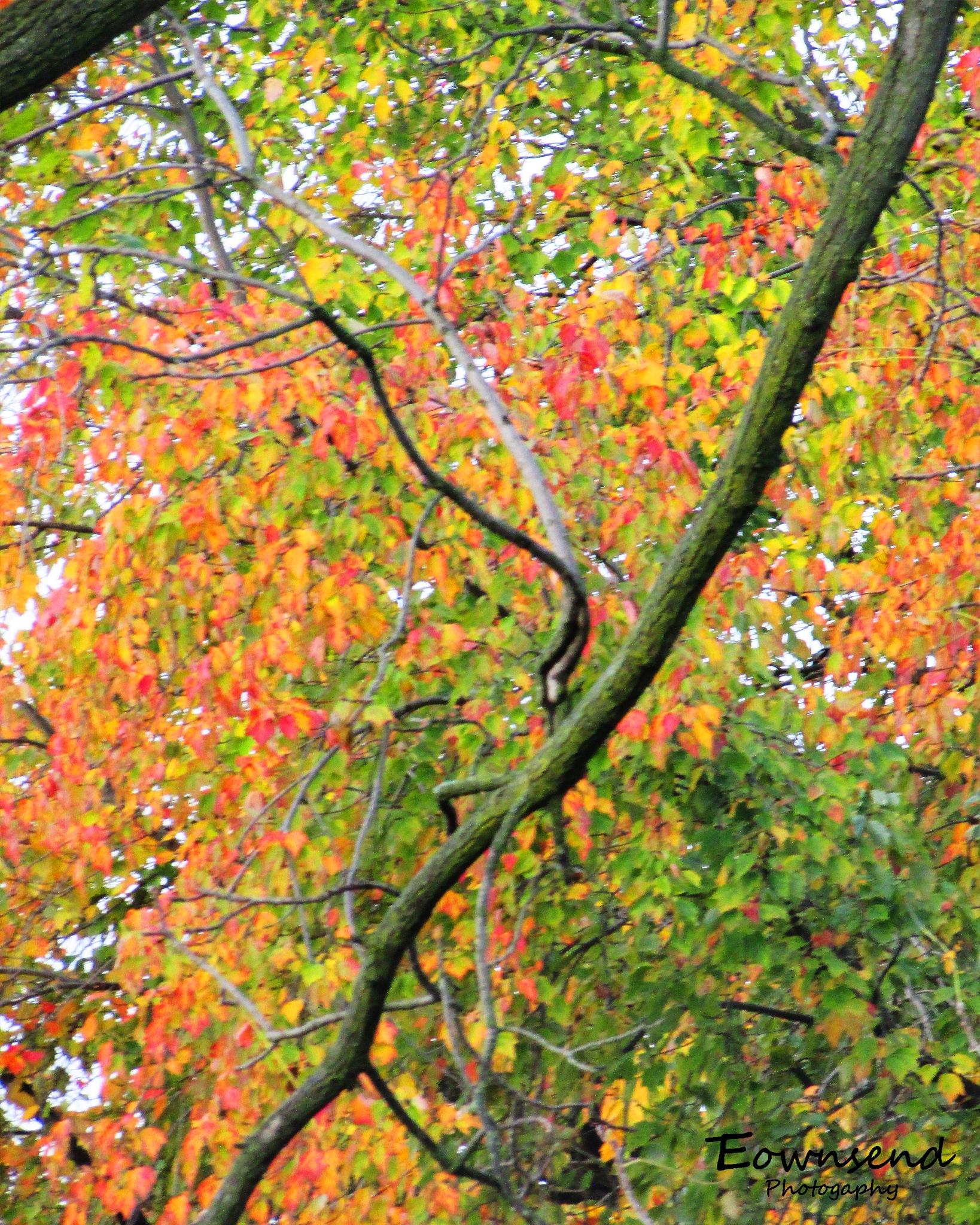 Leaves by Elizabeth C. Townsend