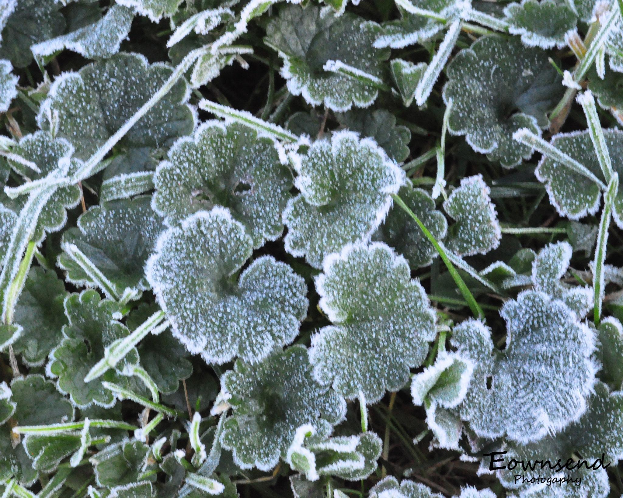 Frost by Elizabeth C. Townsend