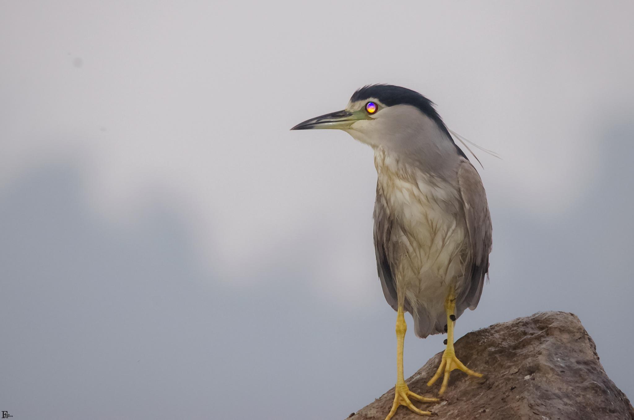 Birds by Hani Gewily
