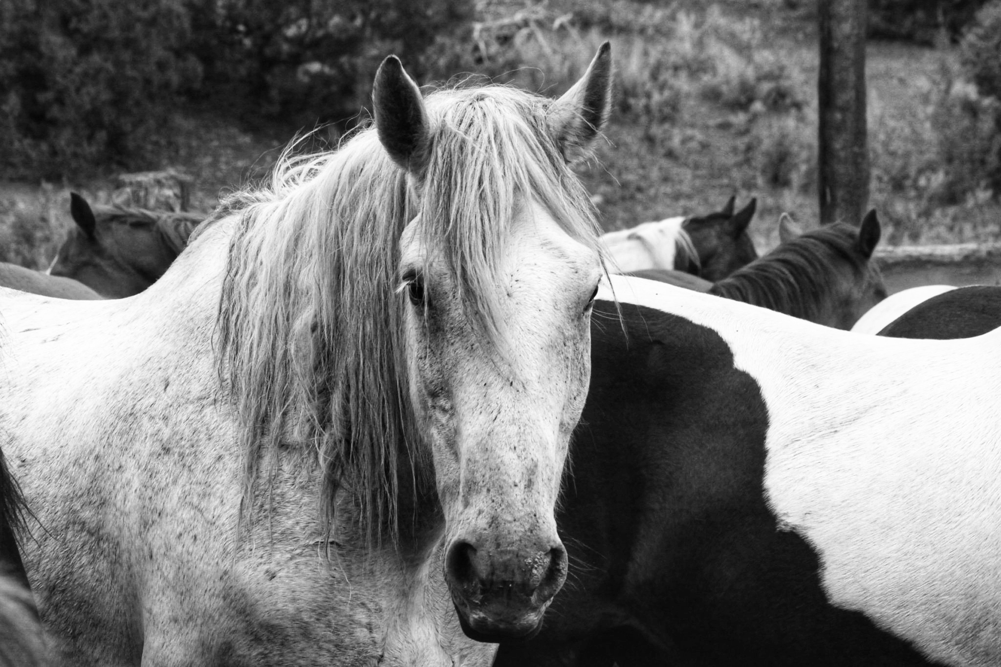 Great old Horse by Carole Martinez