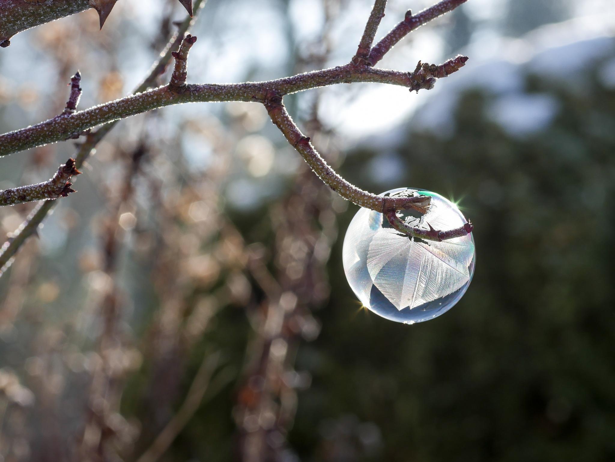 Breeze of spring by Stefanie Haas