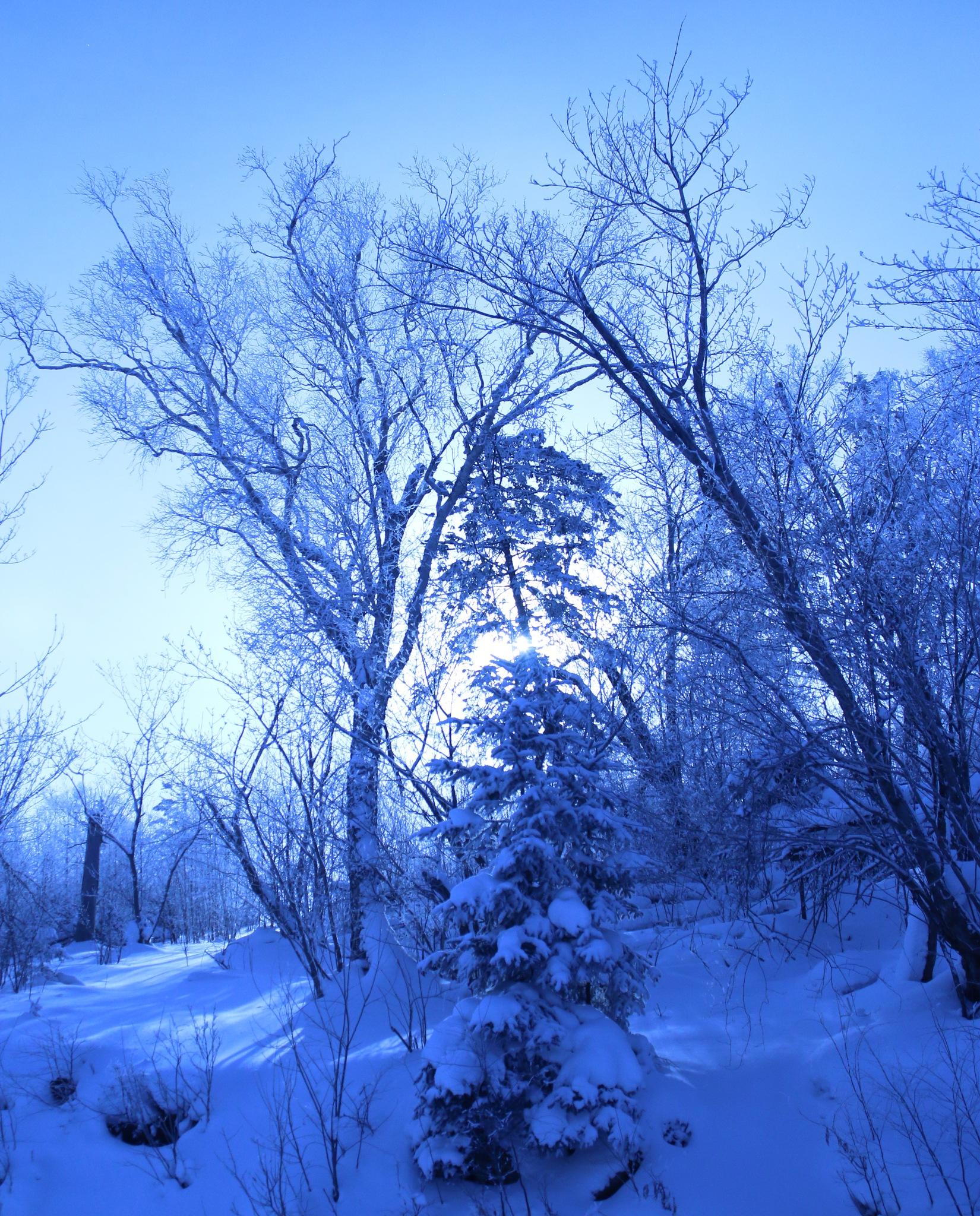 The sun in winter by liuxuewen