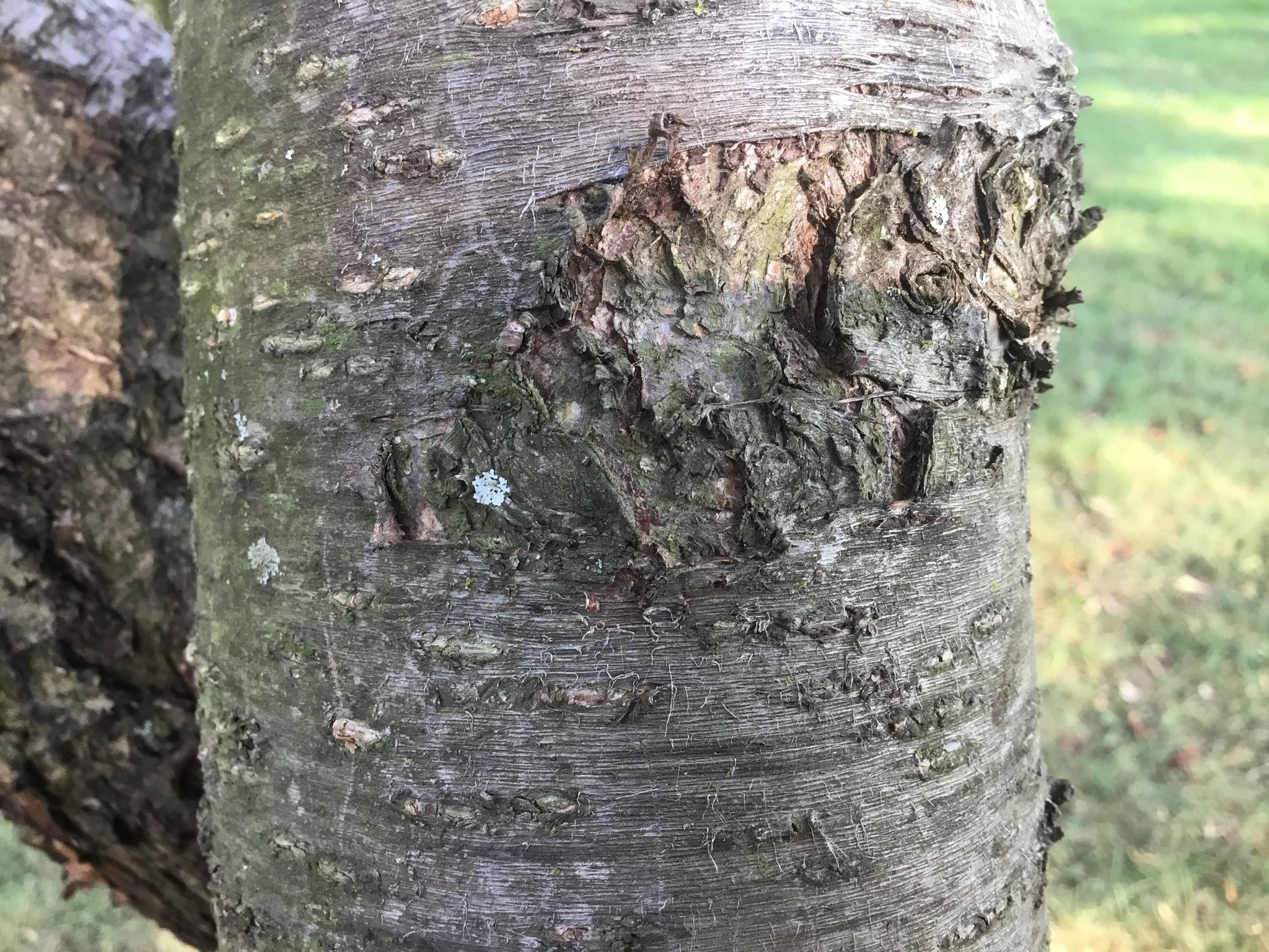 Tree by Jadenreed