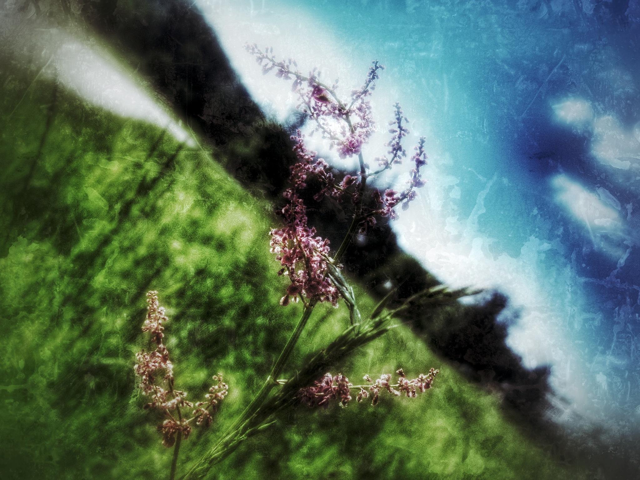 summer memories by Michal Dunaj