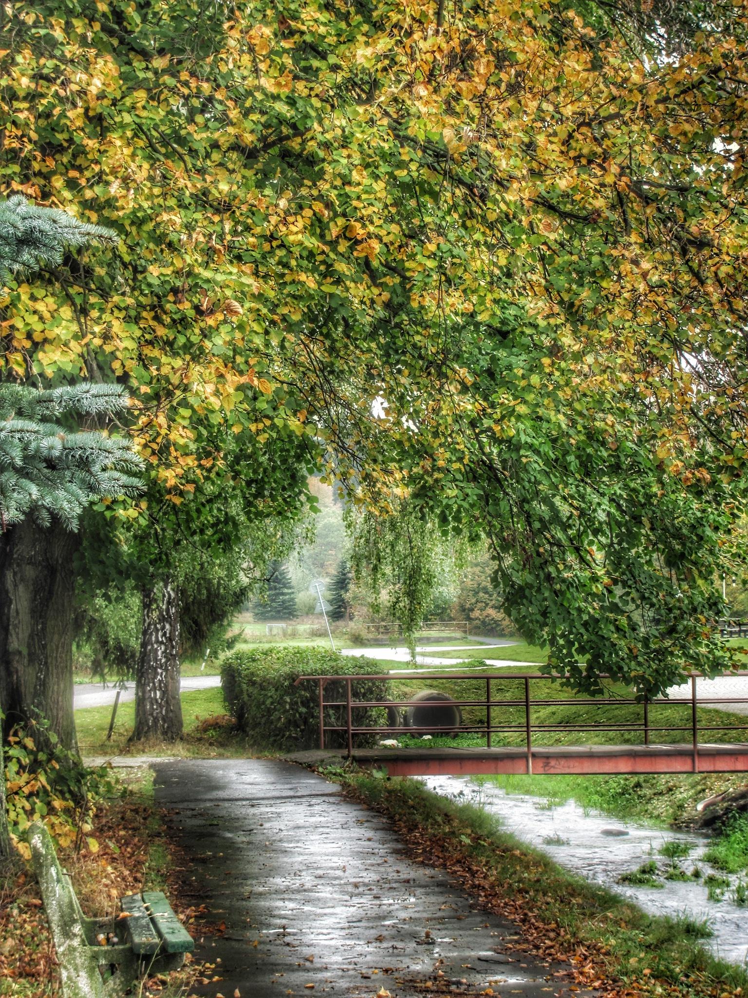 after rain by Michal Dunaj
