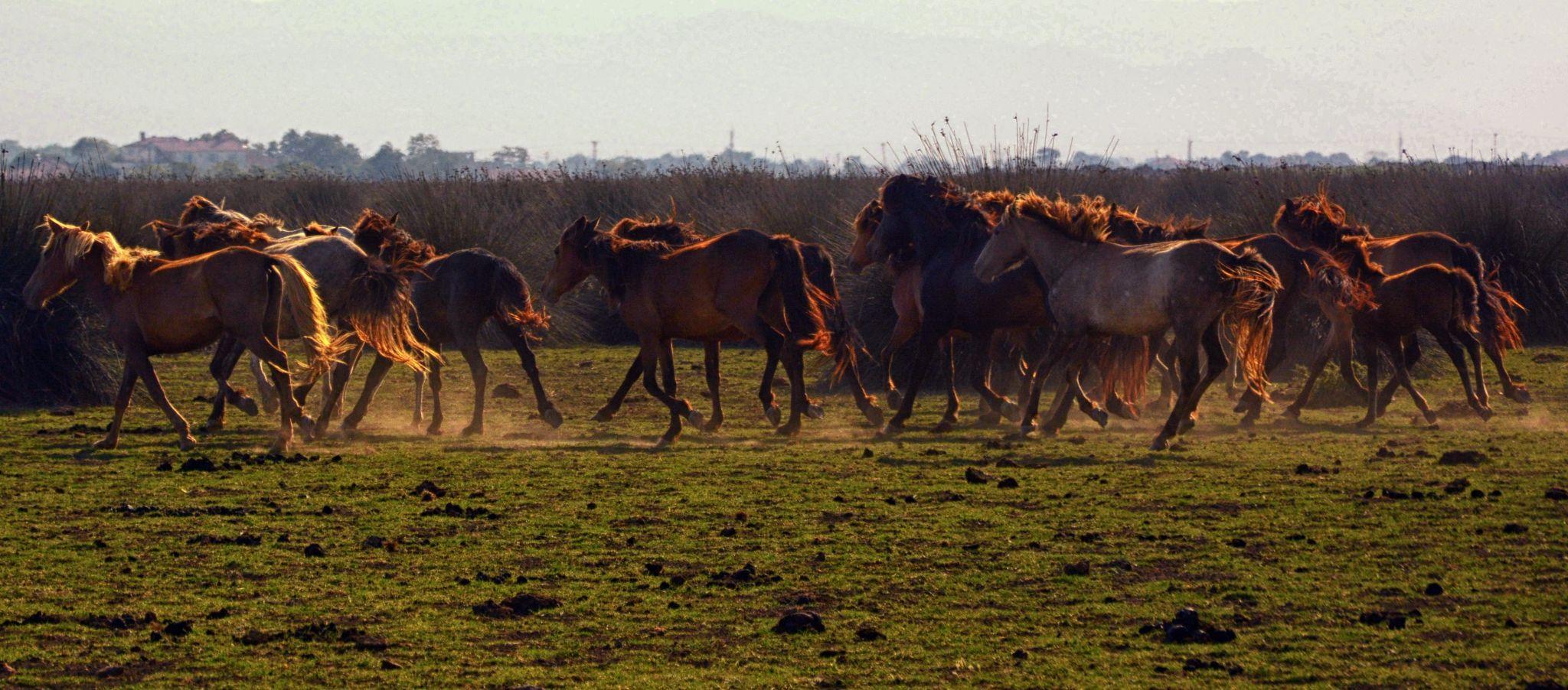 Wild horses by Hakan Leblebicioglu