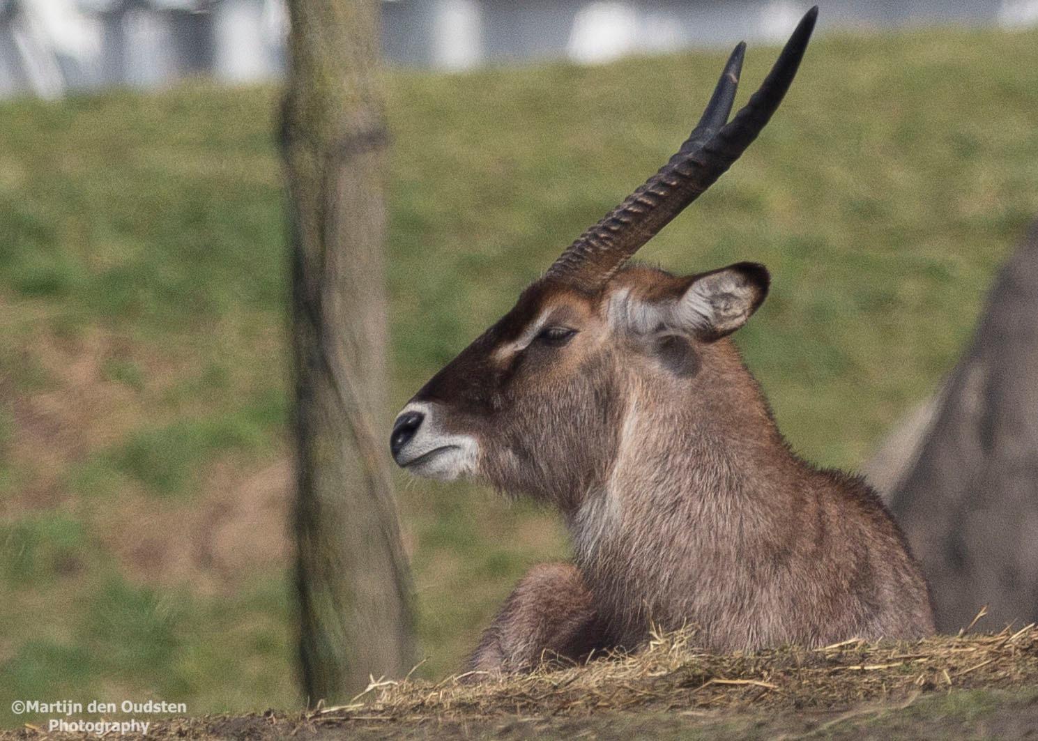 Animal by Martijn Den Oudsten