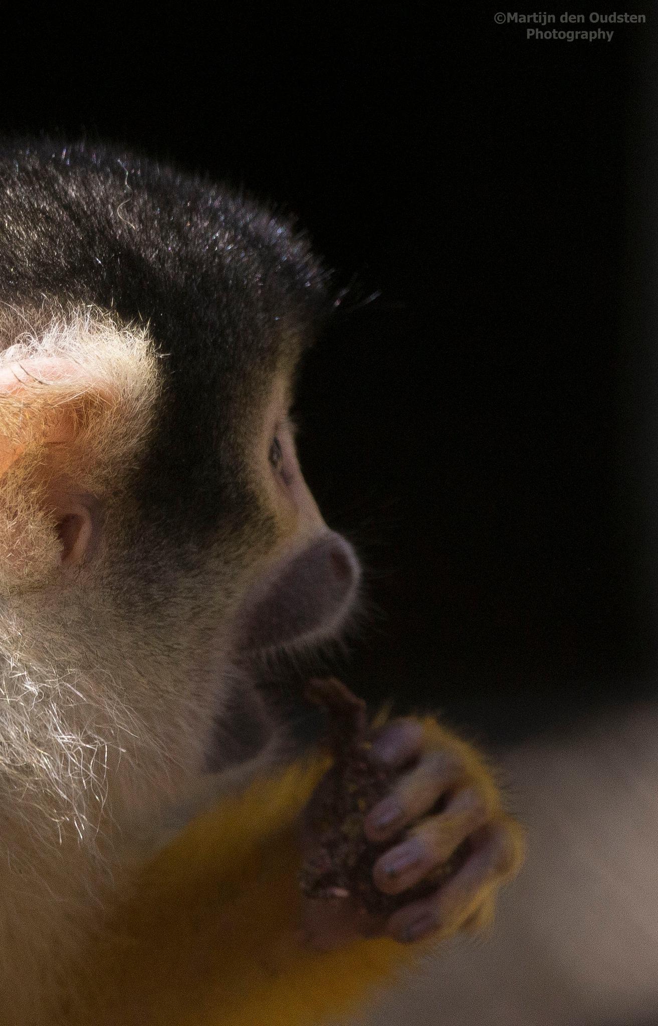 Squirrel monkey by Martijn Den Oudsten