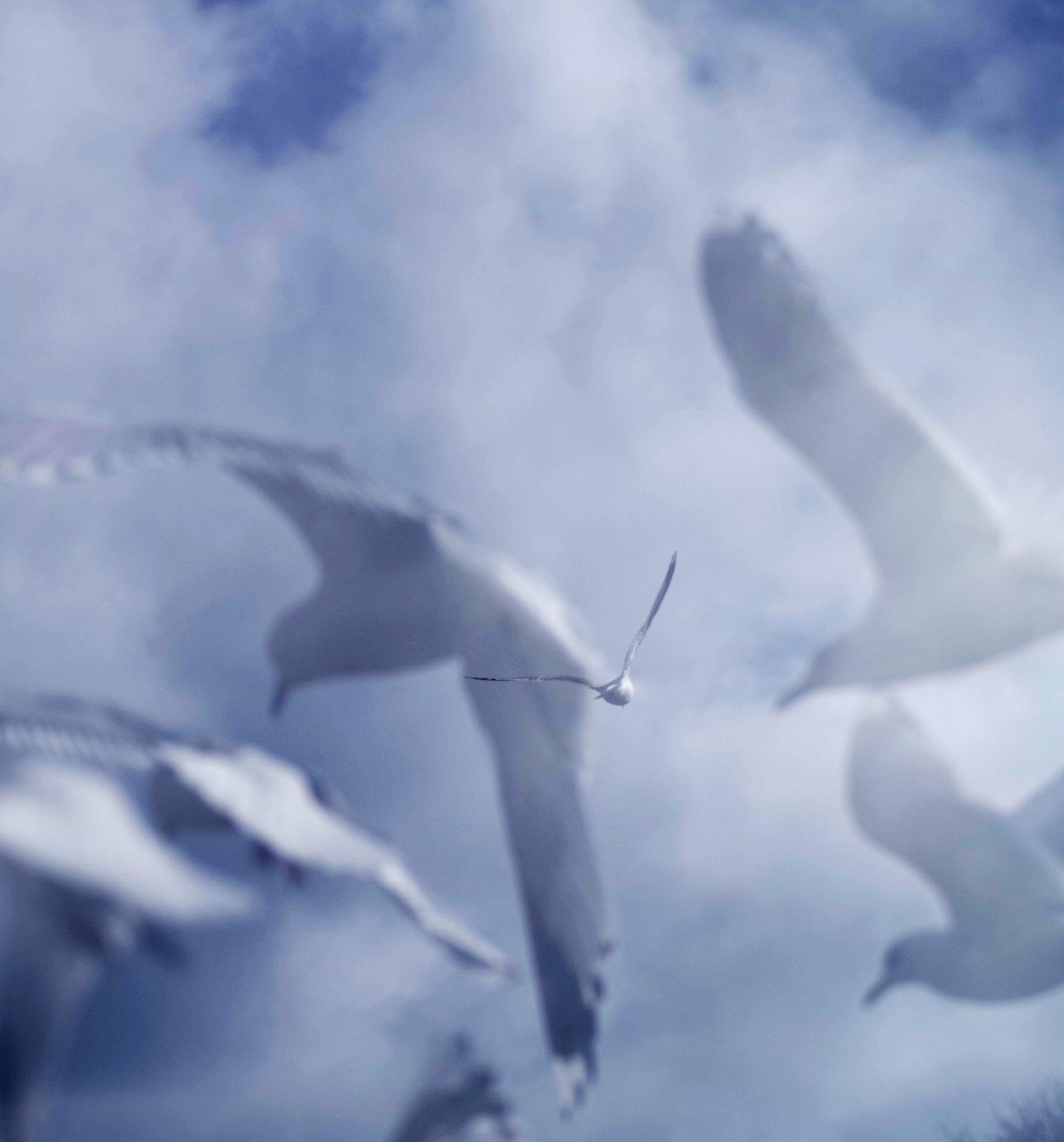 Seagulls. by ylva