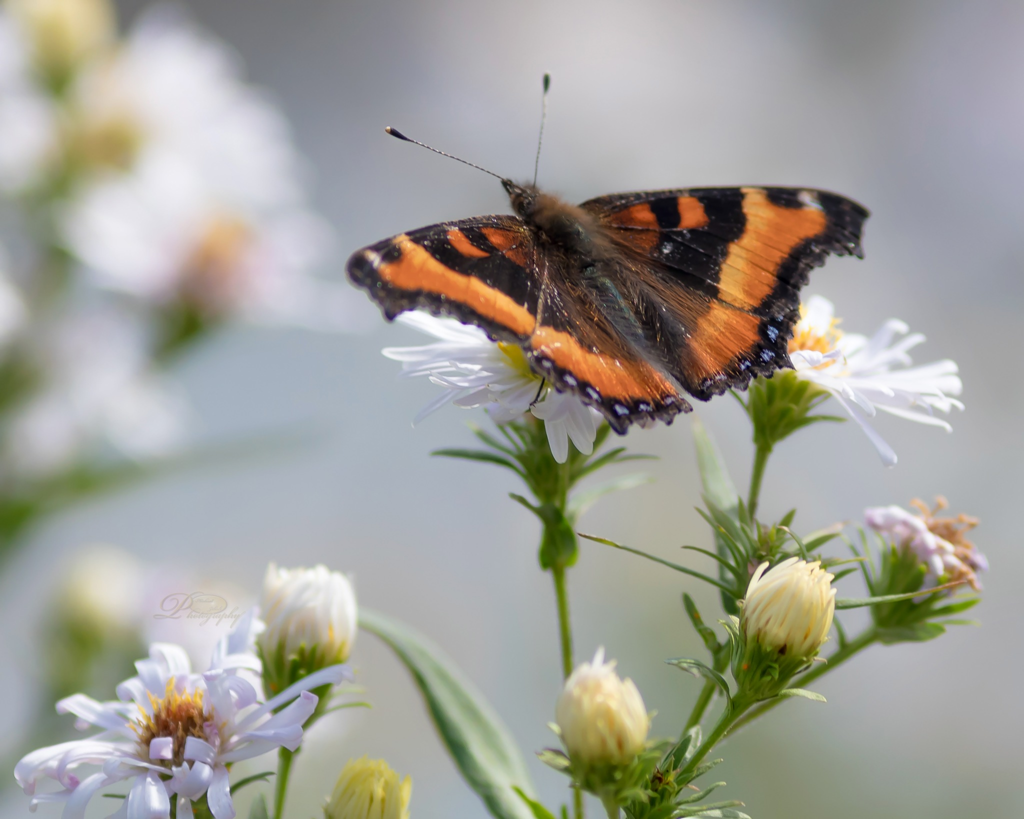 Butterfly By The Channel by Michael Johnk