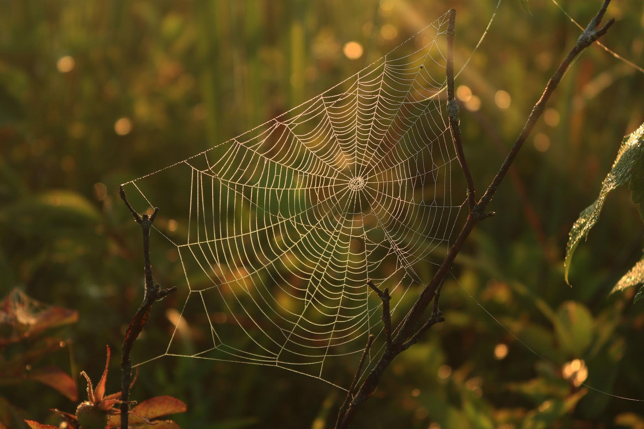Lit Web by Jeff Pudlinski