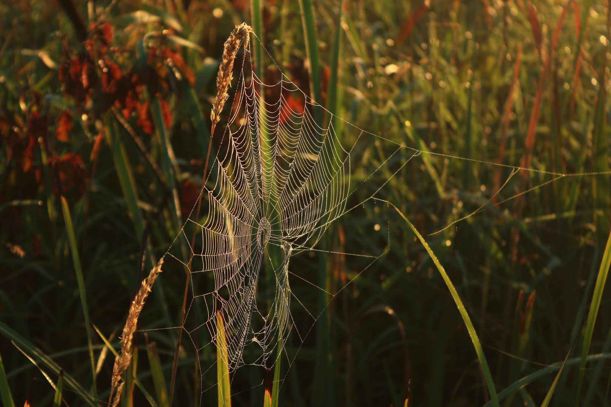 Morning Web by Jeff Pudlinski