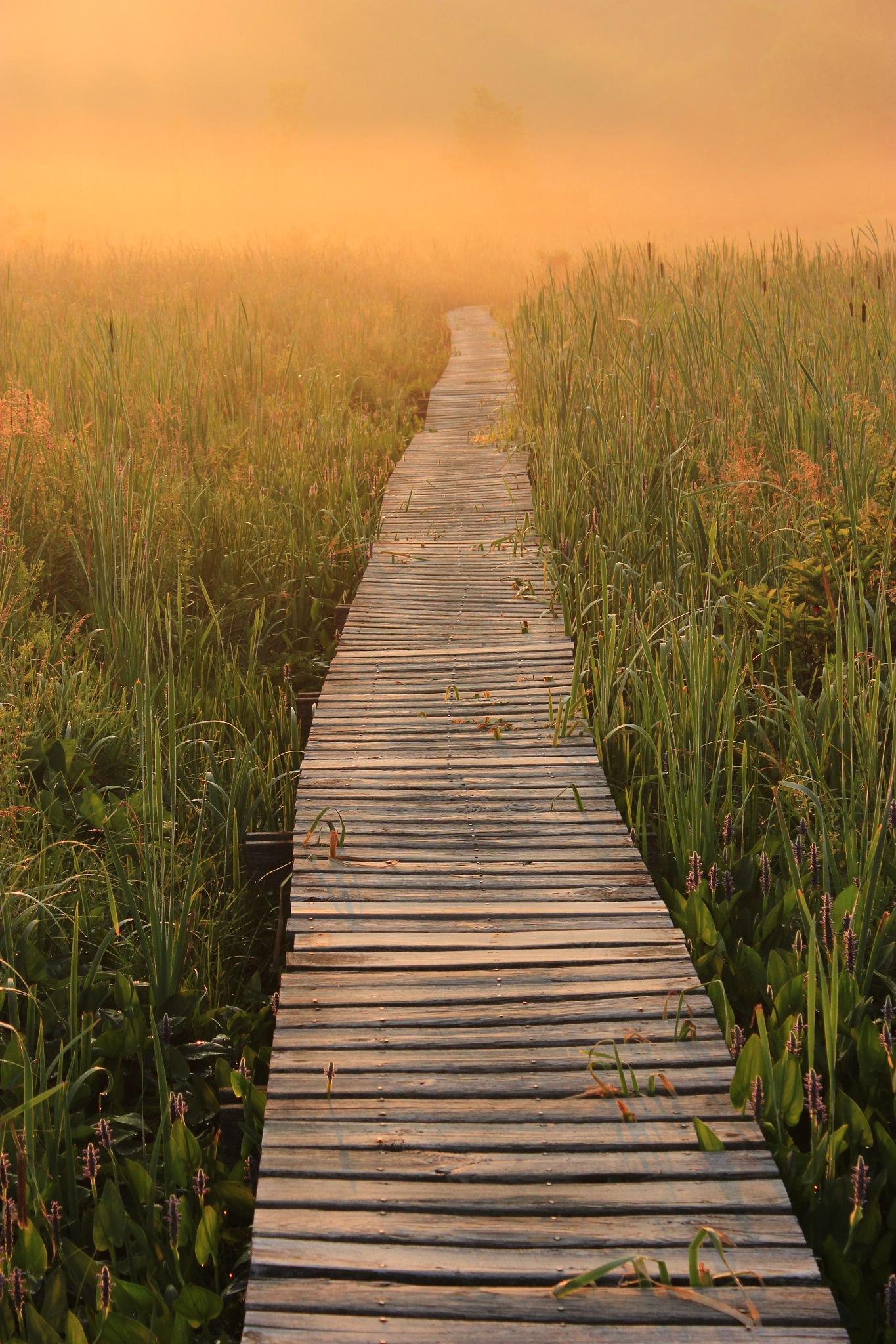 The Orange Mist by Jeff Pudlinski