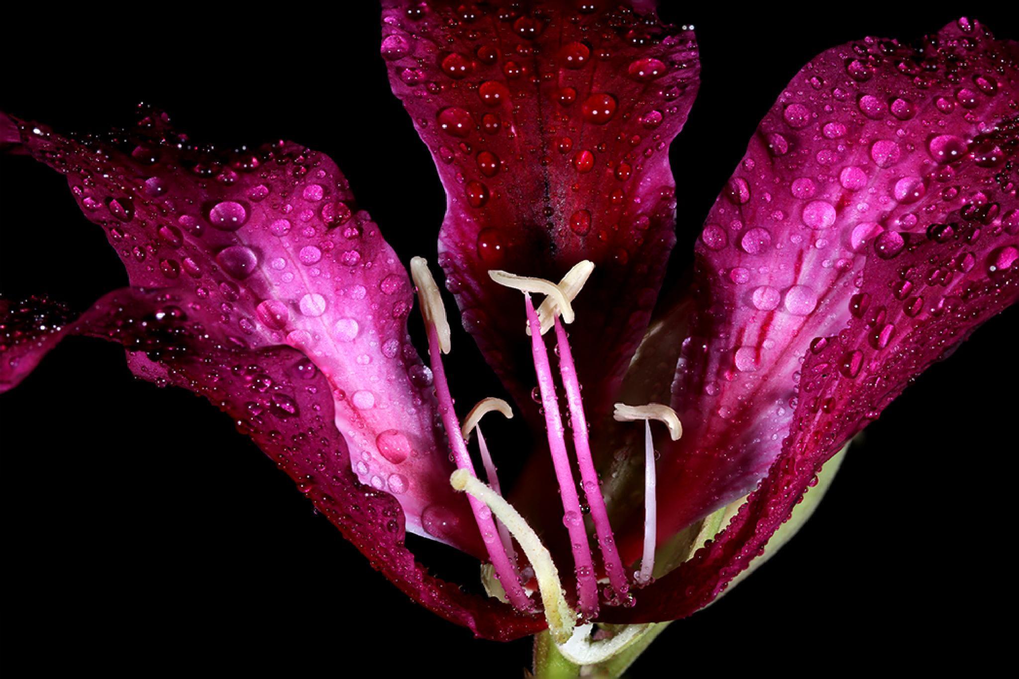 Flower... by Ramakant Sharda