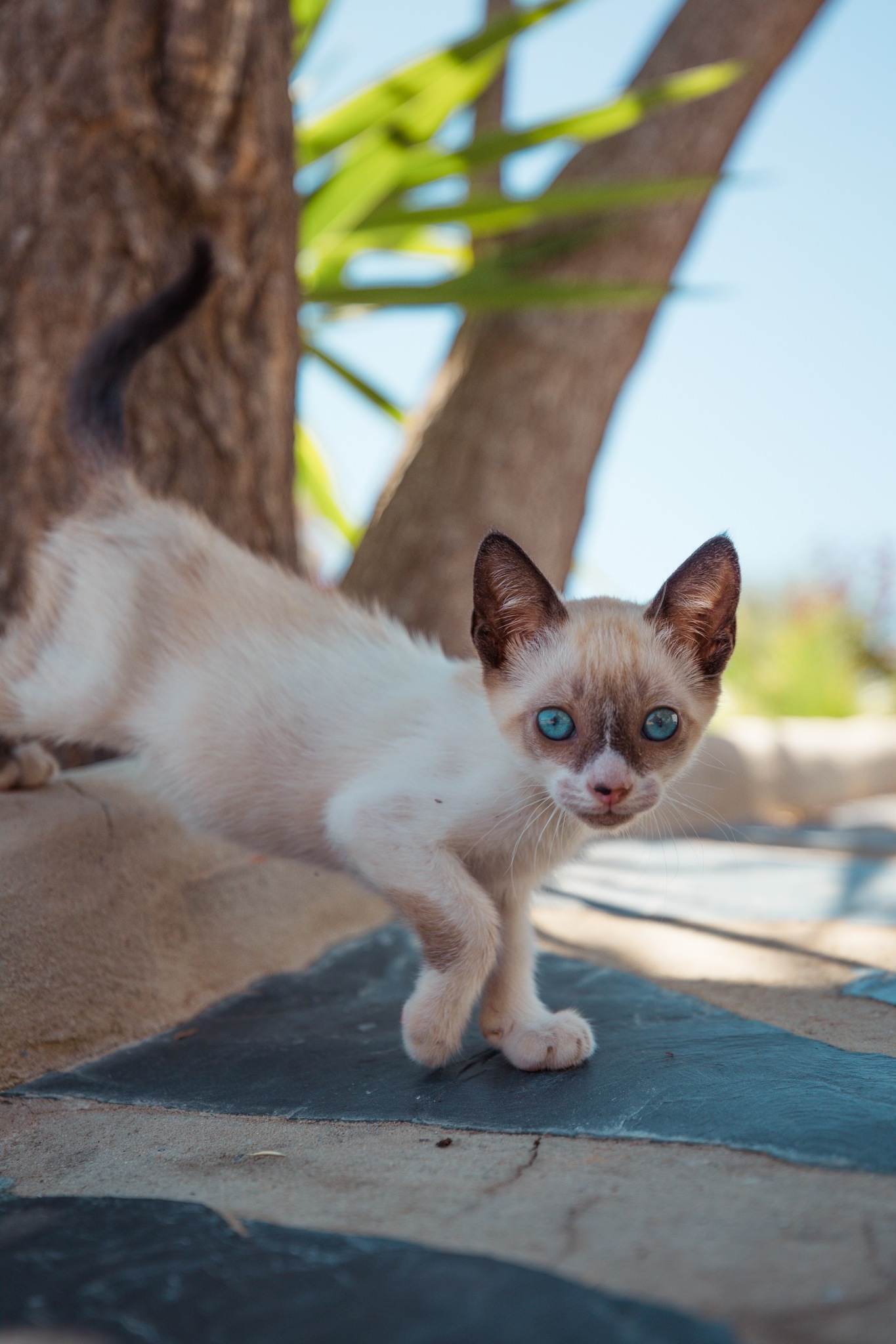 CAT by Justandreas