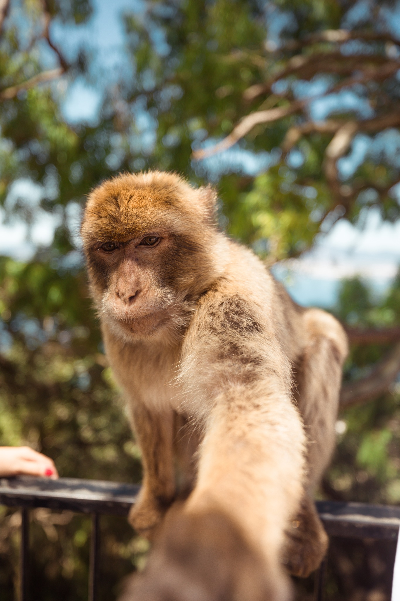 MONKEY by Justandreas