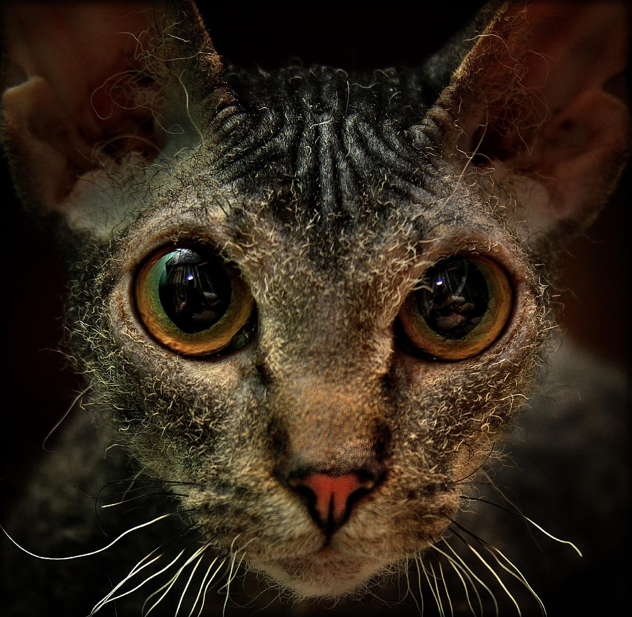 My little friend the kitten is a robber... by Al (Alexander)