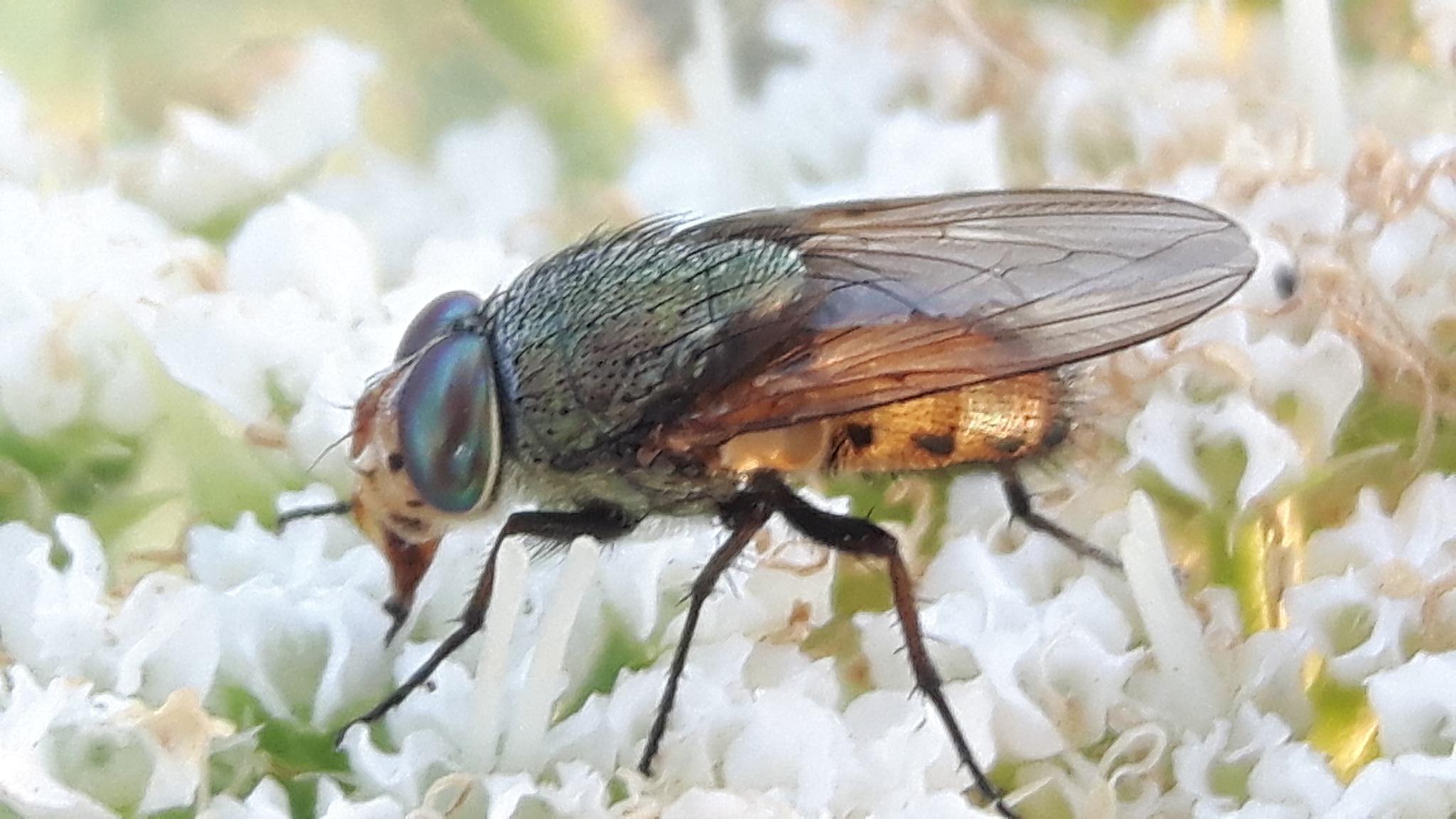 So beautiful fly by Mevludin_Hasanovic