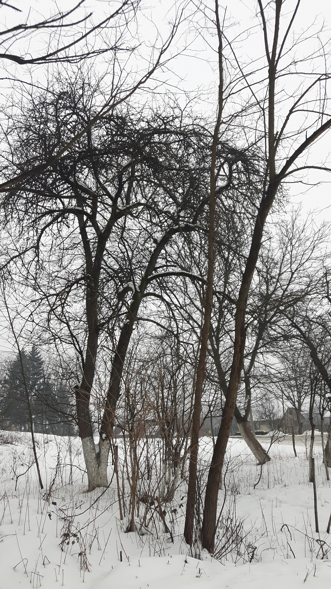 Beautiful trees in snow by Mevludin_Hasanovic