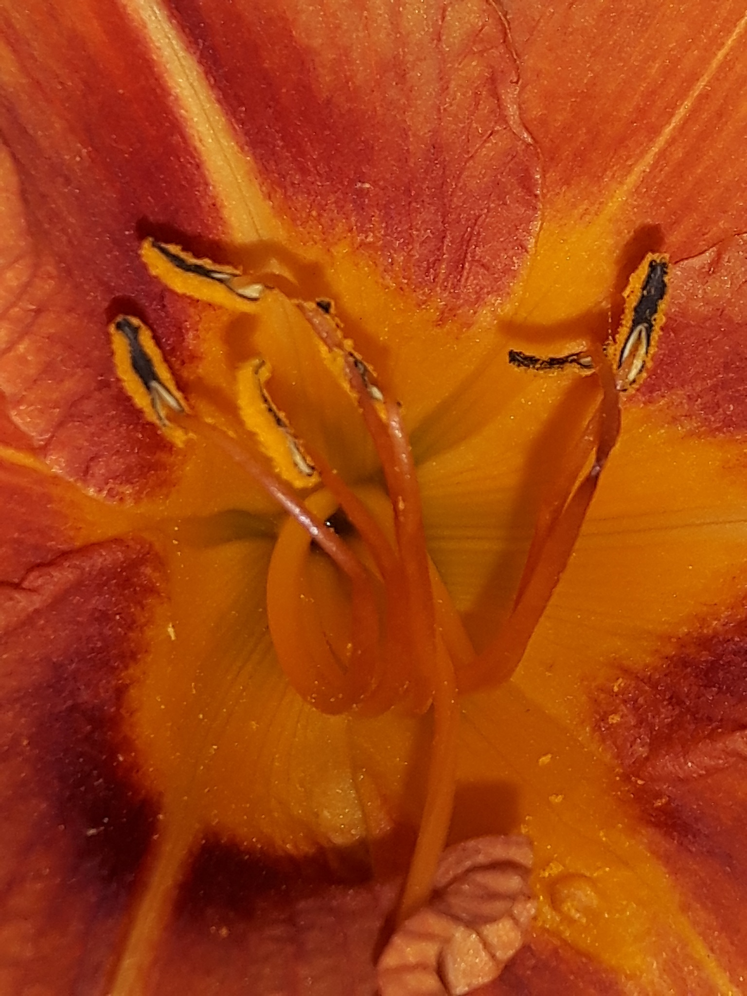Beautiful inside space of orange lilly flower by Mevludin_Hasanovic