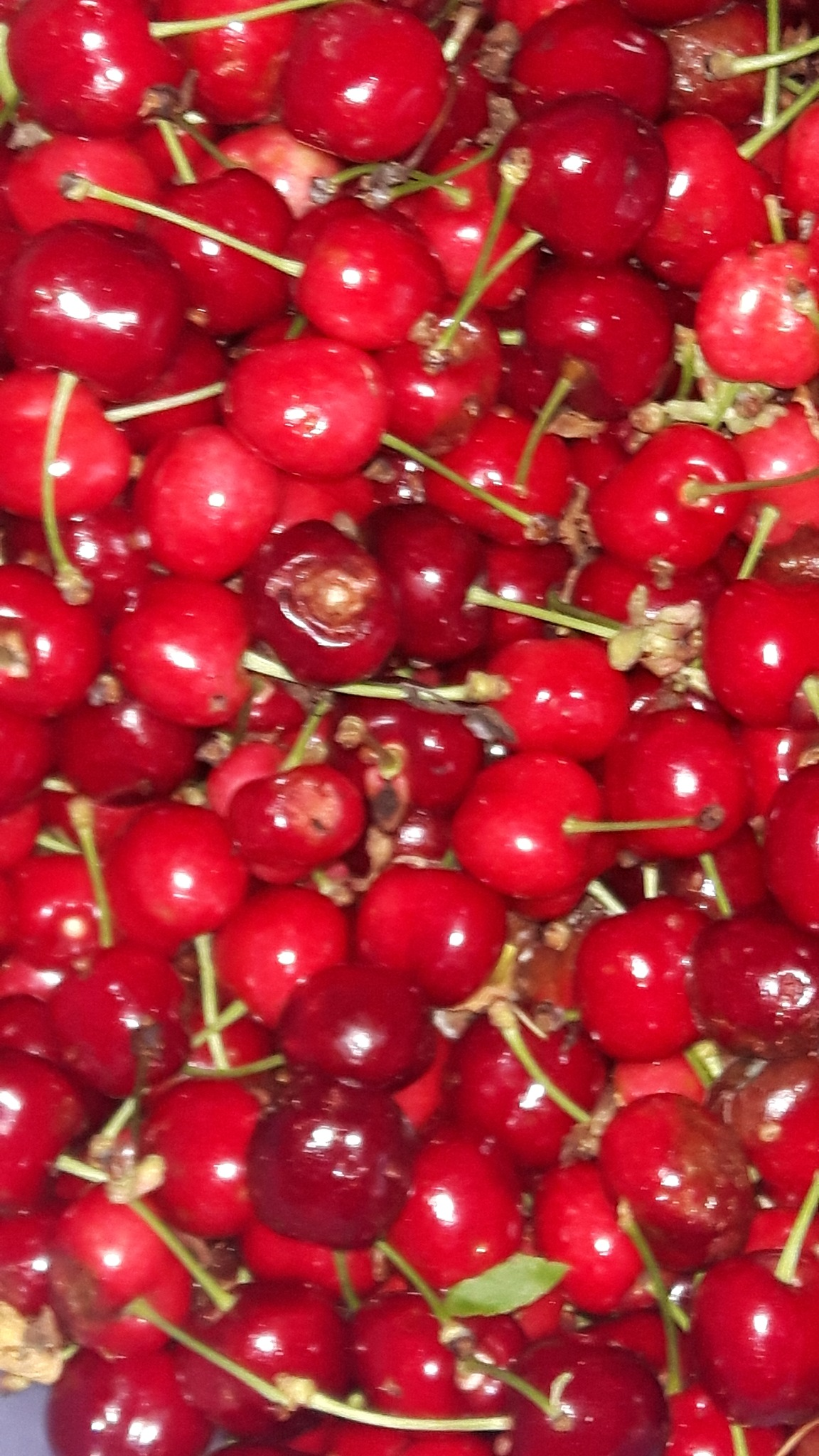 Cherries by Mevludin_Hasanovic