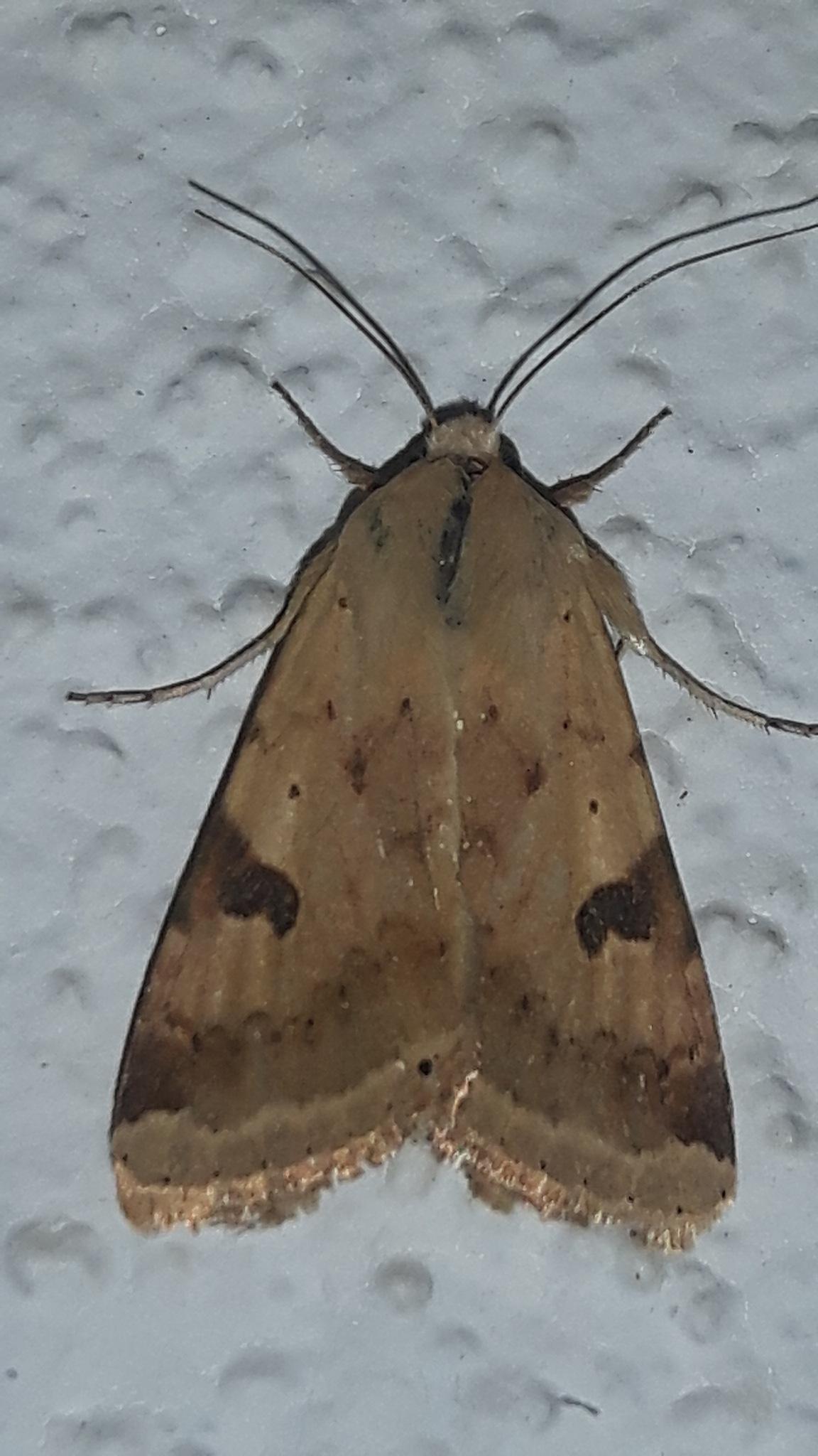Beautiful moth in Ulcinj by Mevludin_Hasanovic