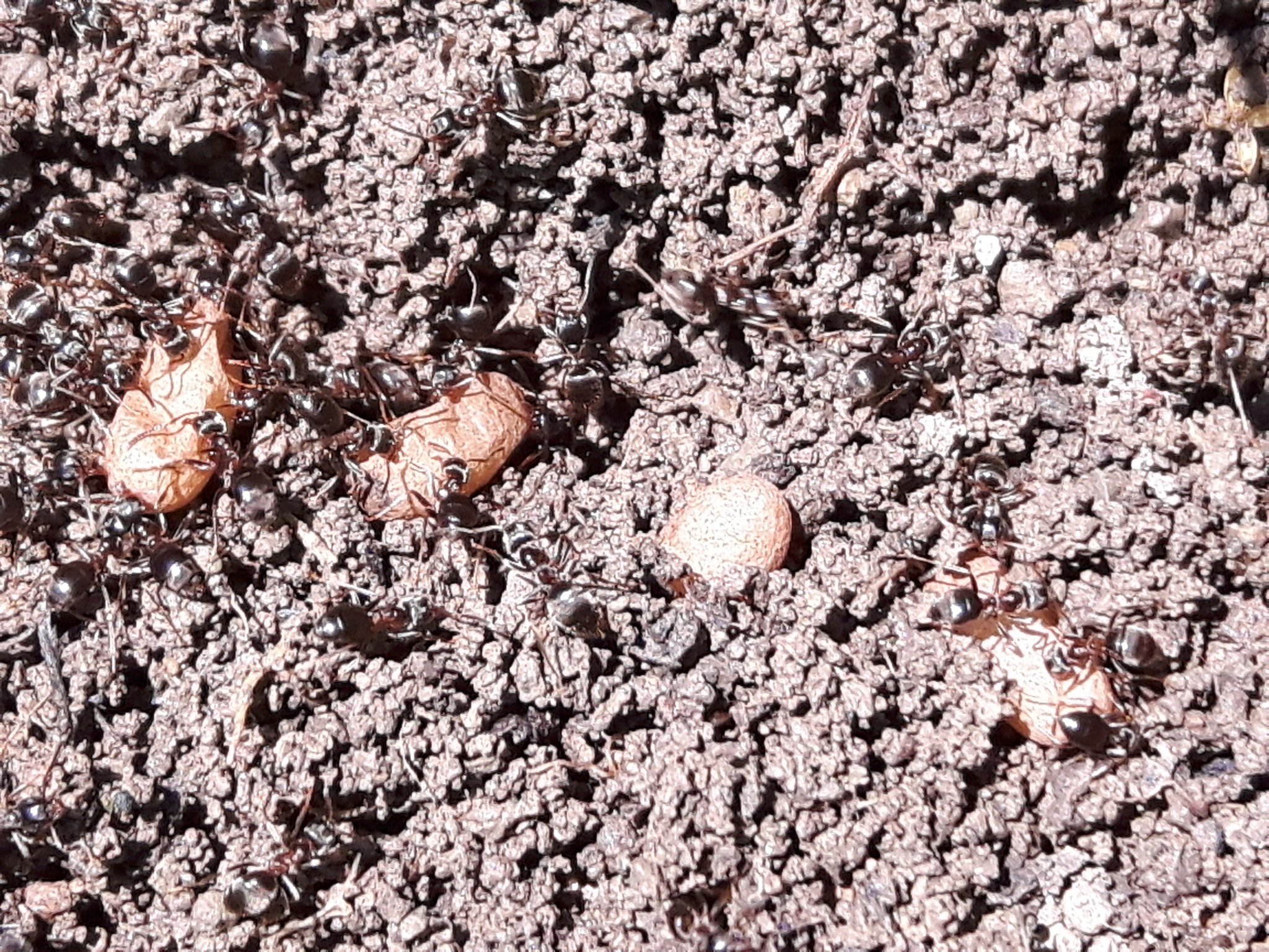 Ants and eggs by Mevludin_Hasanovic