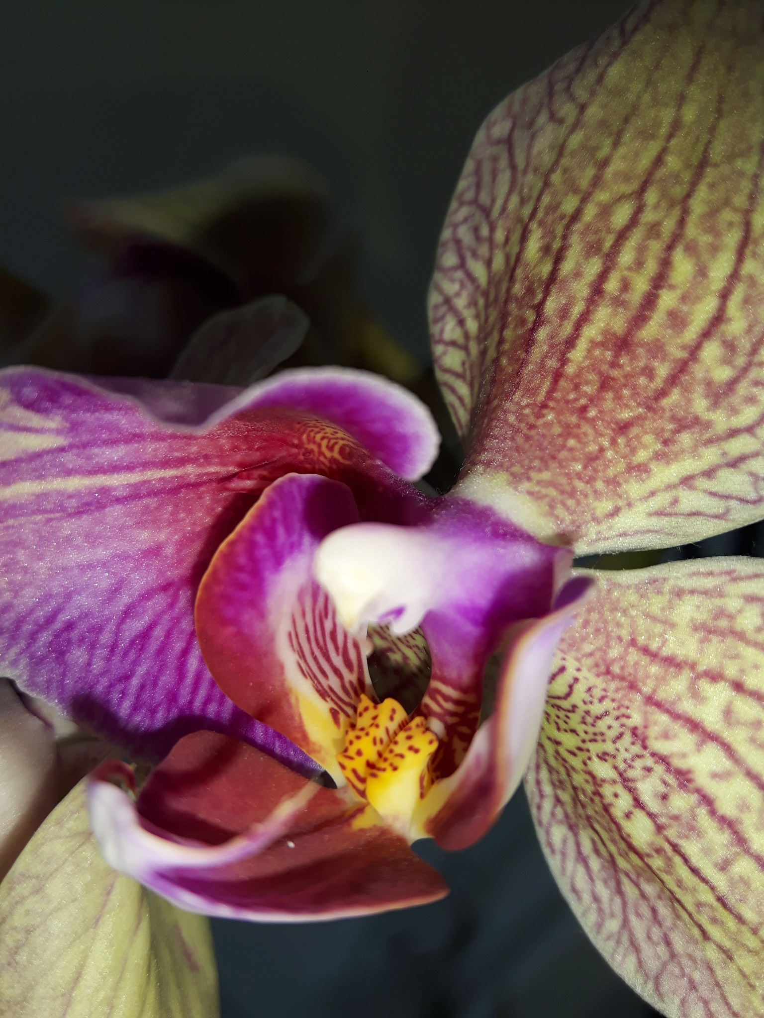 Inside of orchid intimacy by Mevludin_Hasanovic