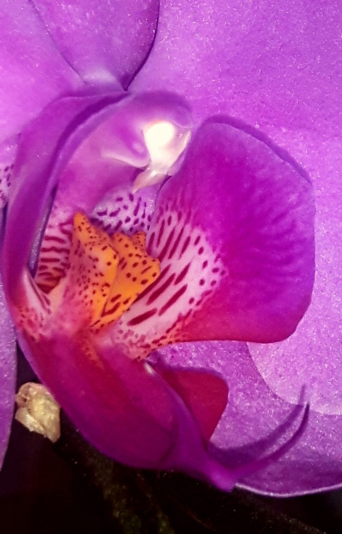 Beautiful orchid beauty by Mevludin_Hasanovic