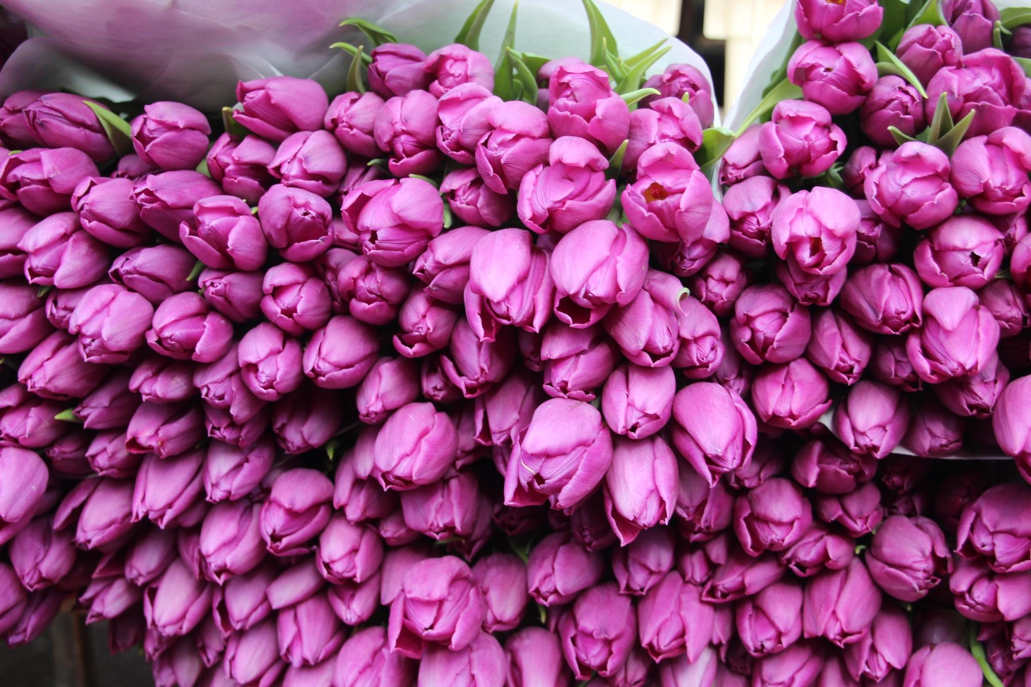 Tulpen aus Amsterdam  by Norbert Pohl