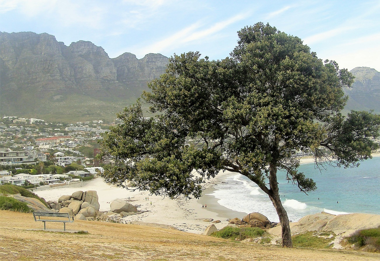 Tree with the 12 Apostles by Dan Gts