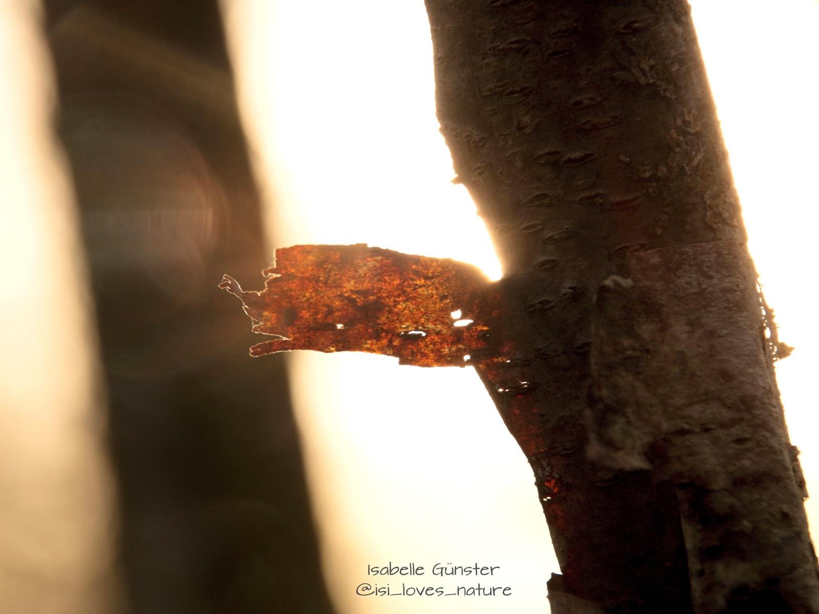 Sunlight 2 by Isabelle_guenster_fotografie