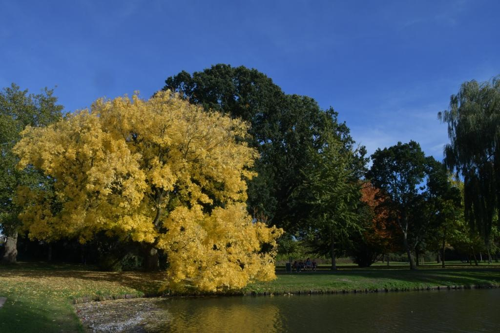 Autumn in Kampen by Bart Kluivingh Fotografie