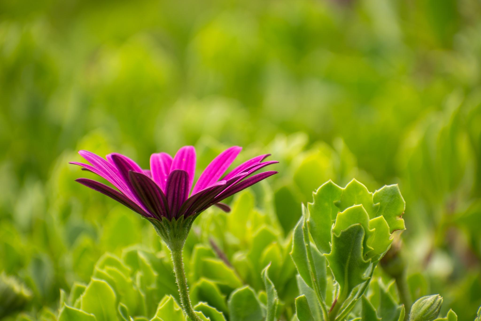 Flower by Bart Kluivingh Fotografie