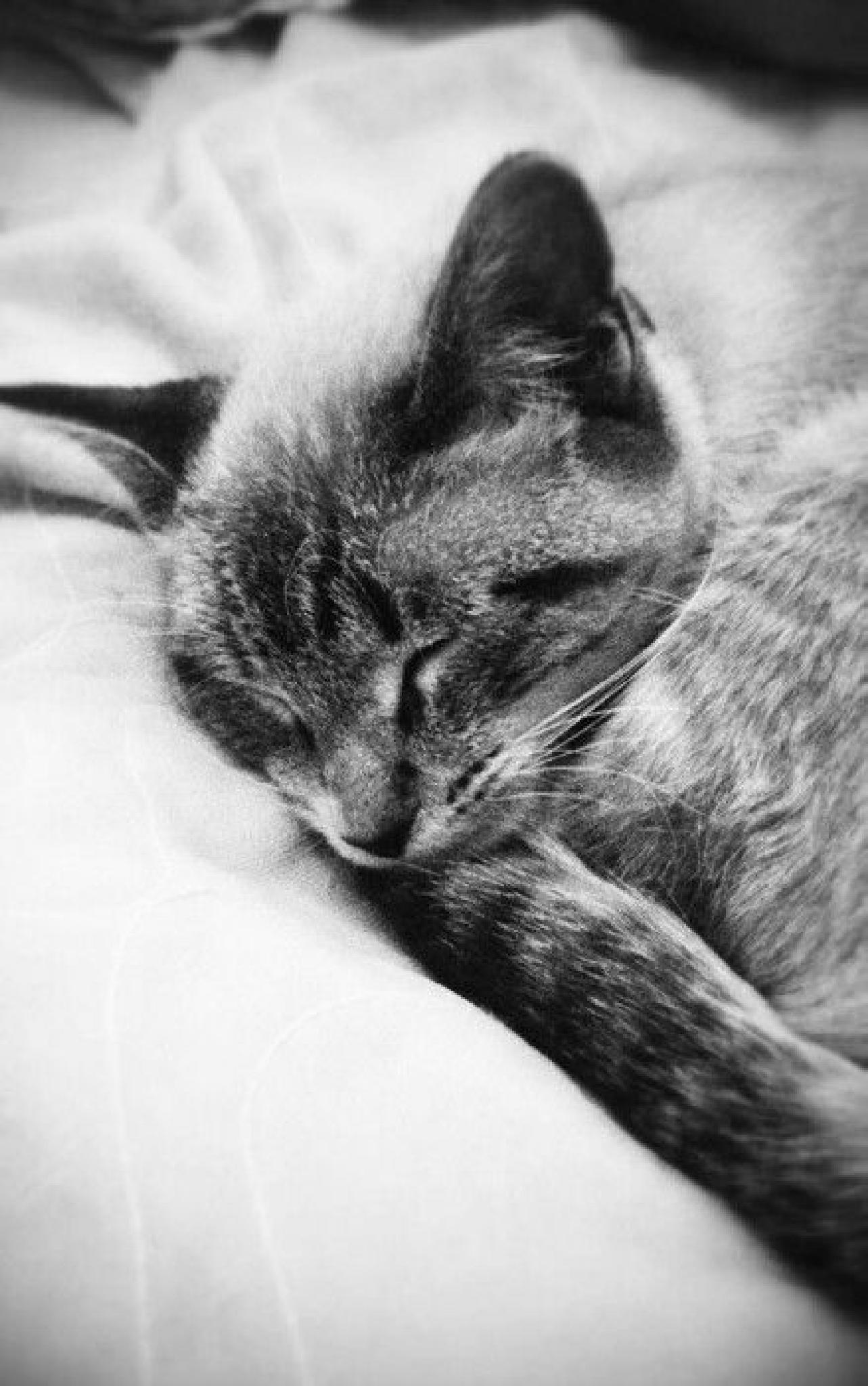 Sleepy Kitty by Ben Indie