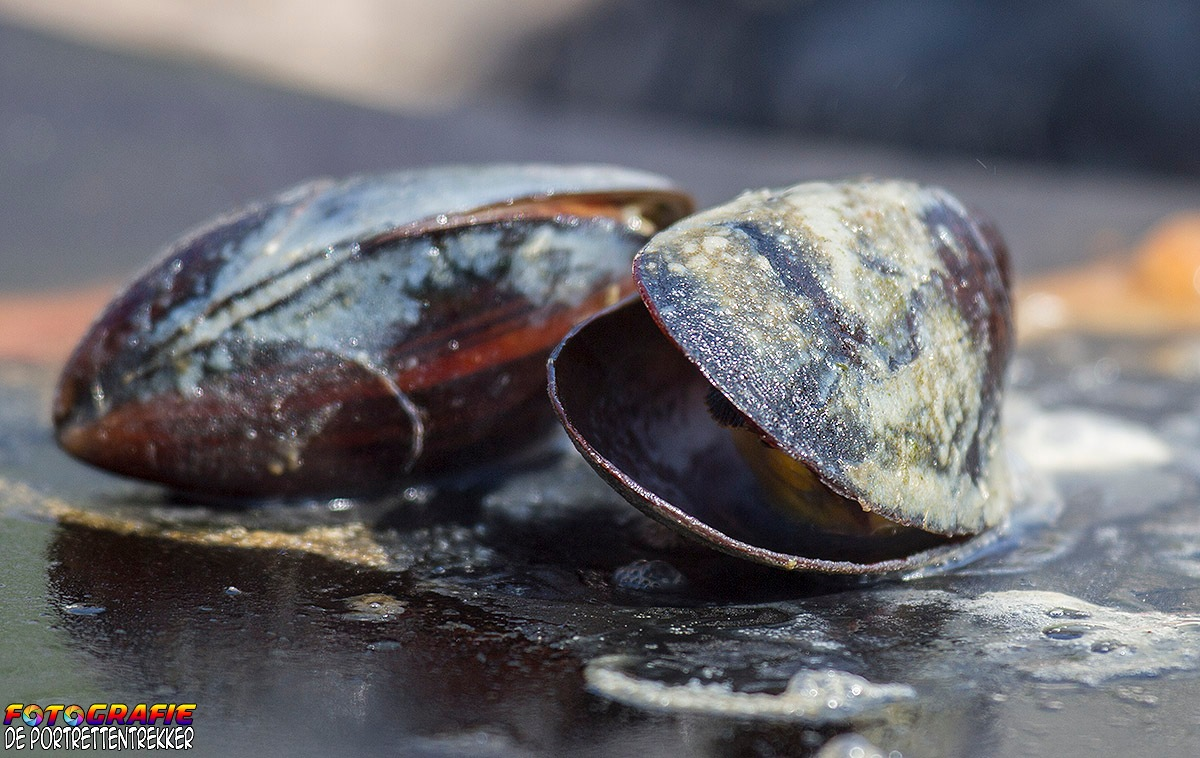 Mussel cooking  by Gino Wallaert