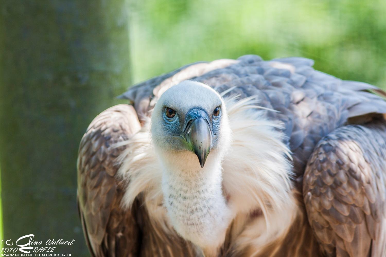 Angry bird ?? by Gino Wallaert
