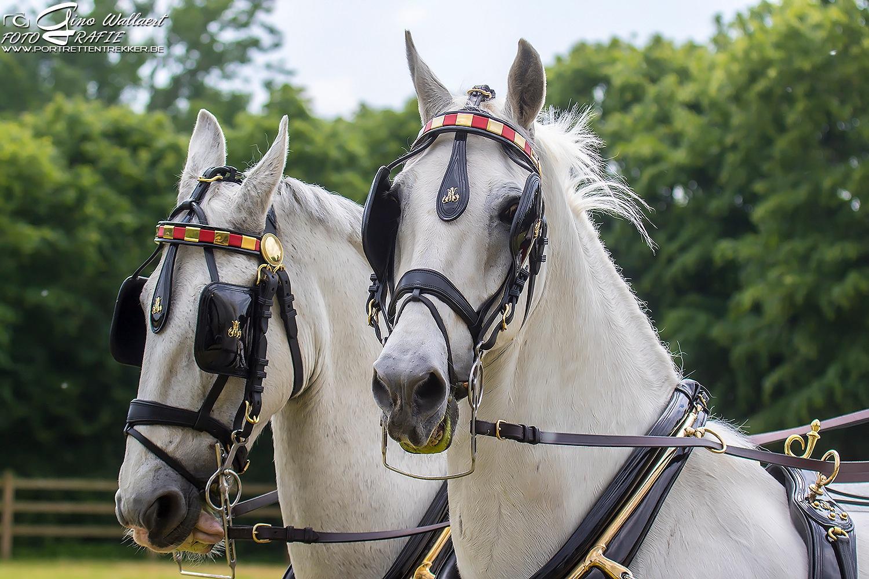 Horses by Gino Wallaert
