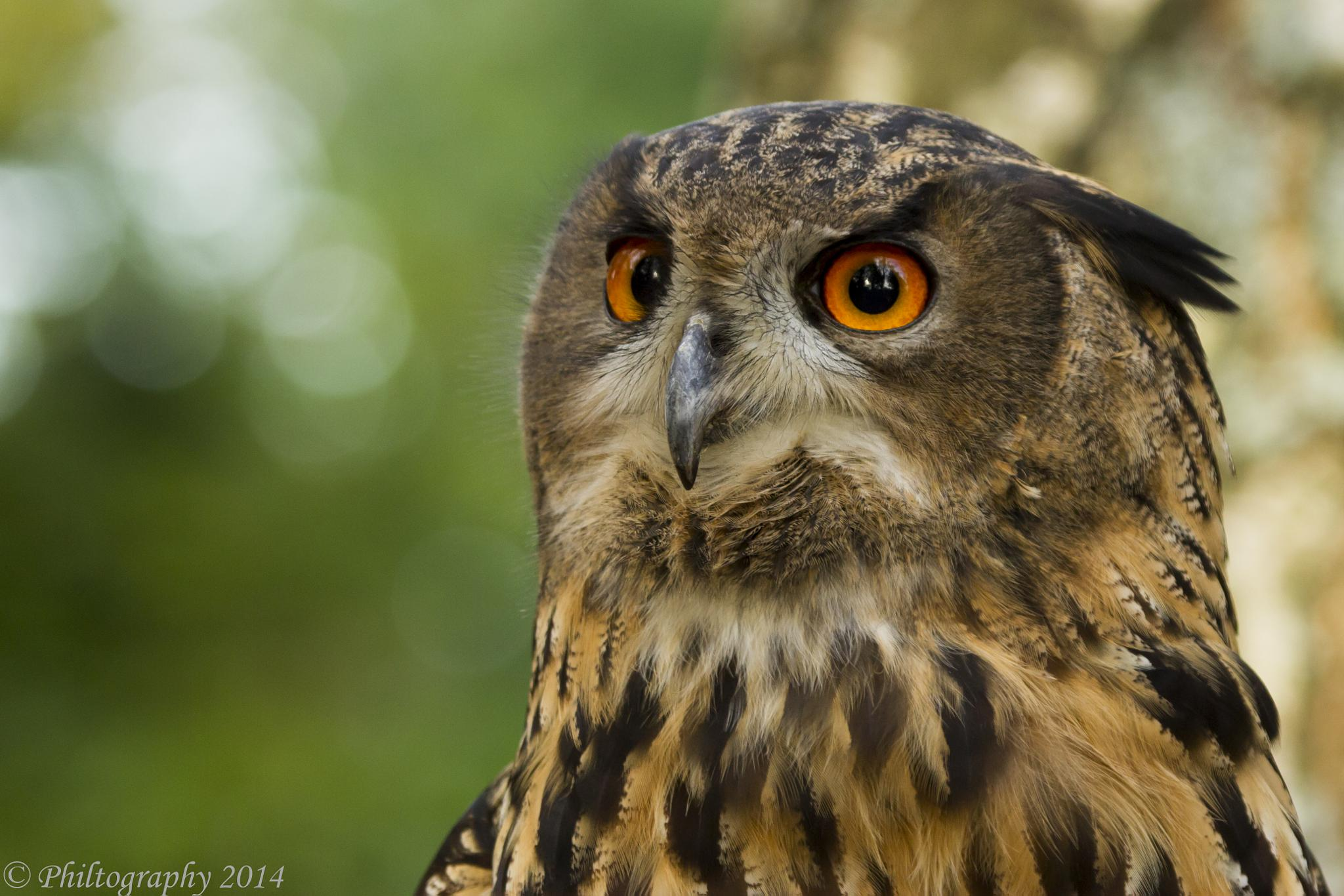 Eagle Owl by Philtography