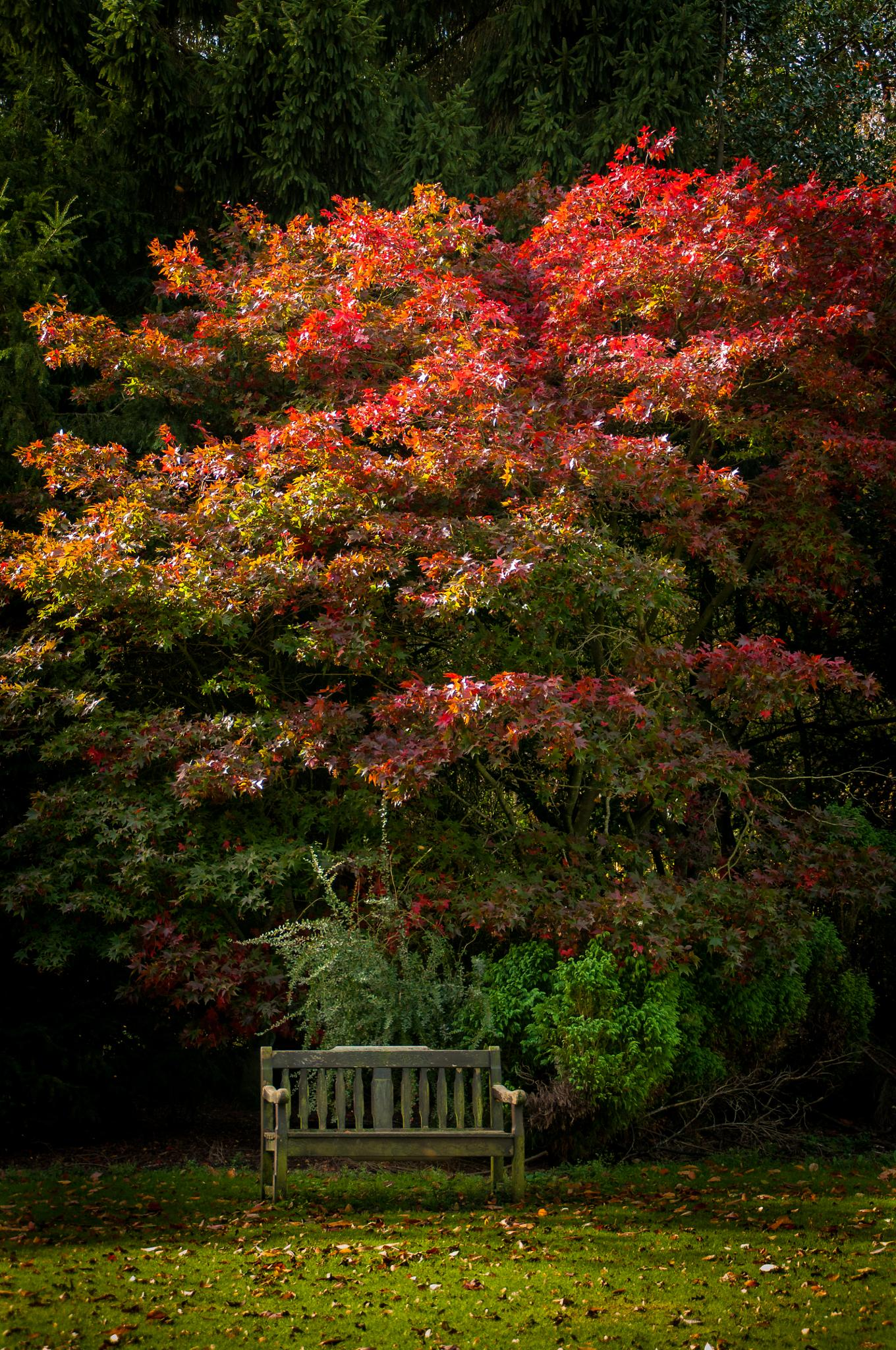 Park Bench with Autumn Colours by Darren Marshall