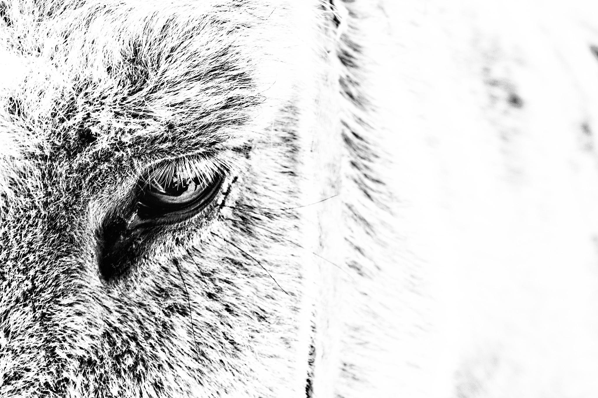 Highkey Donkey... by redfoxartful
