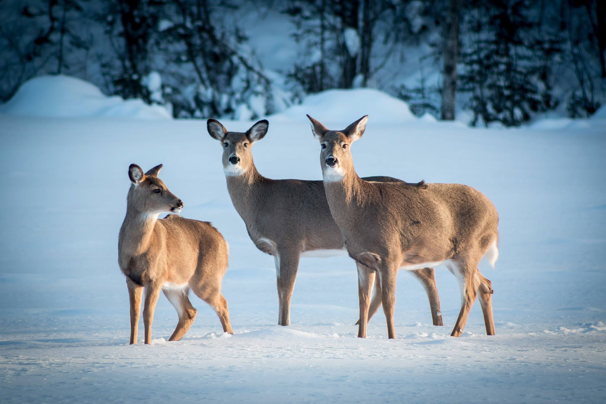 Winter Wanderers by Cami Lind