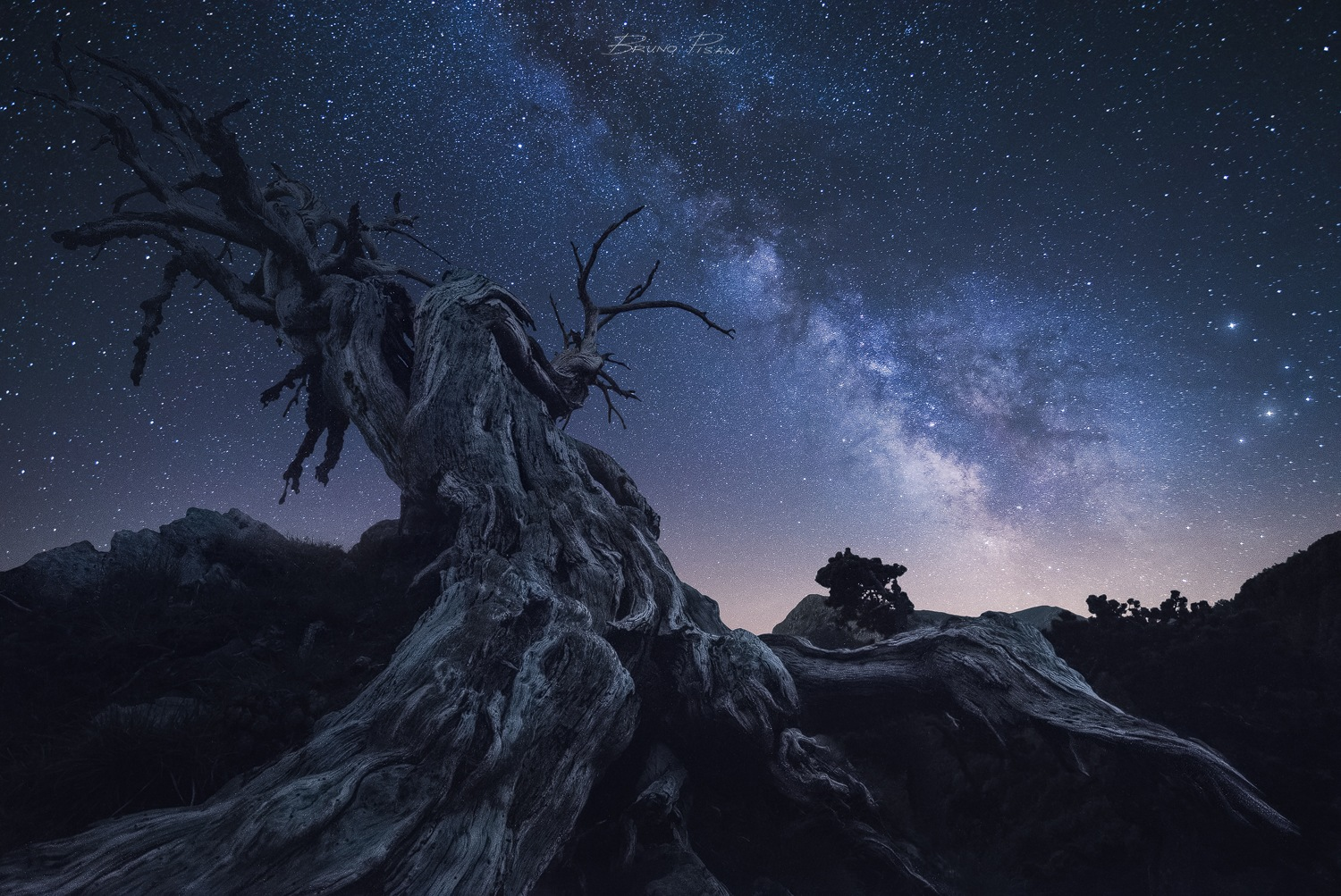 Among the Ancients by Bruno Pisani