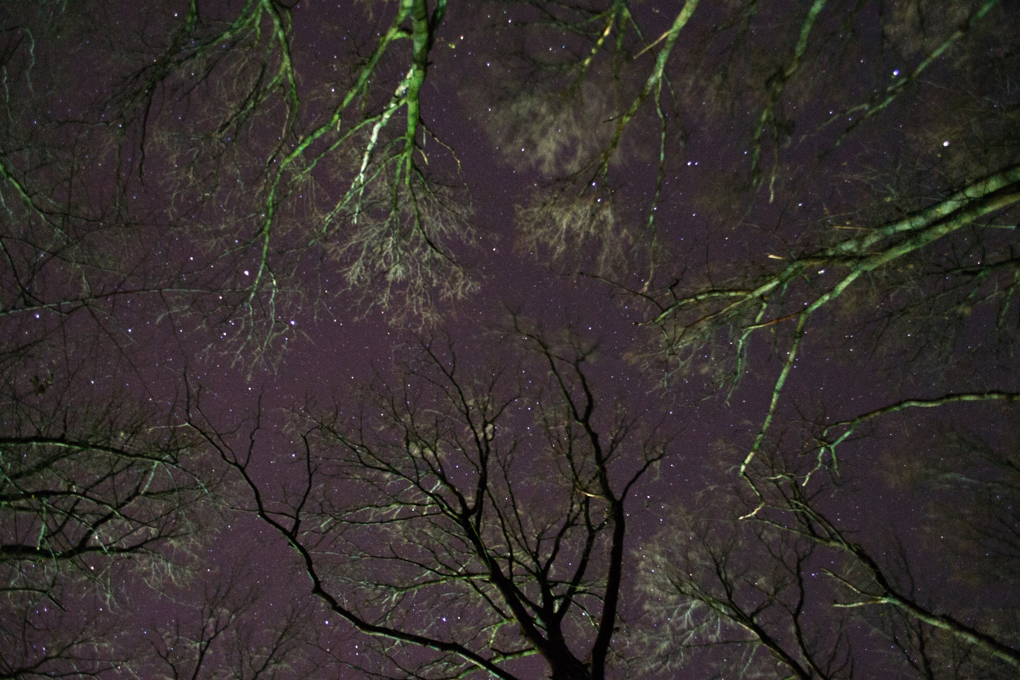 Woods and a starry sky by Paralangaj Andrea