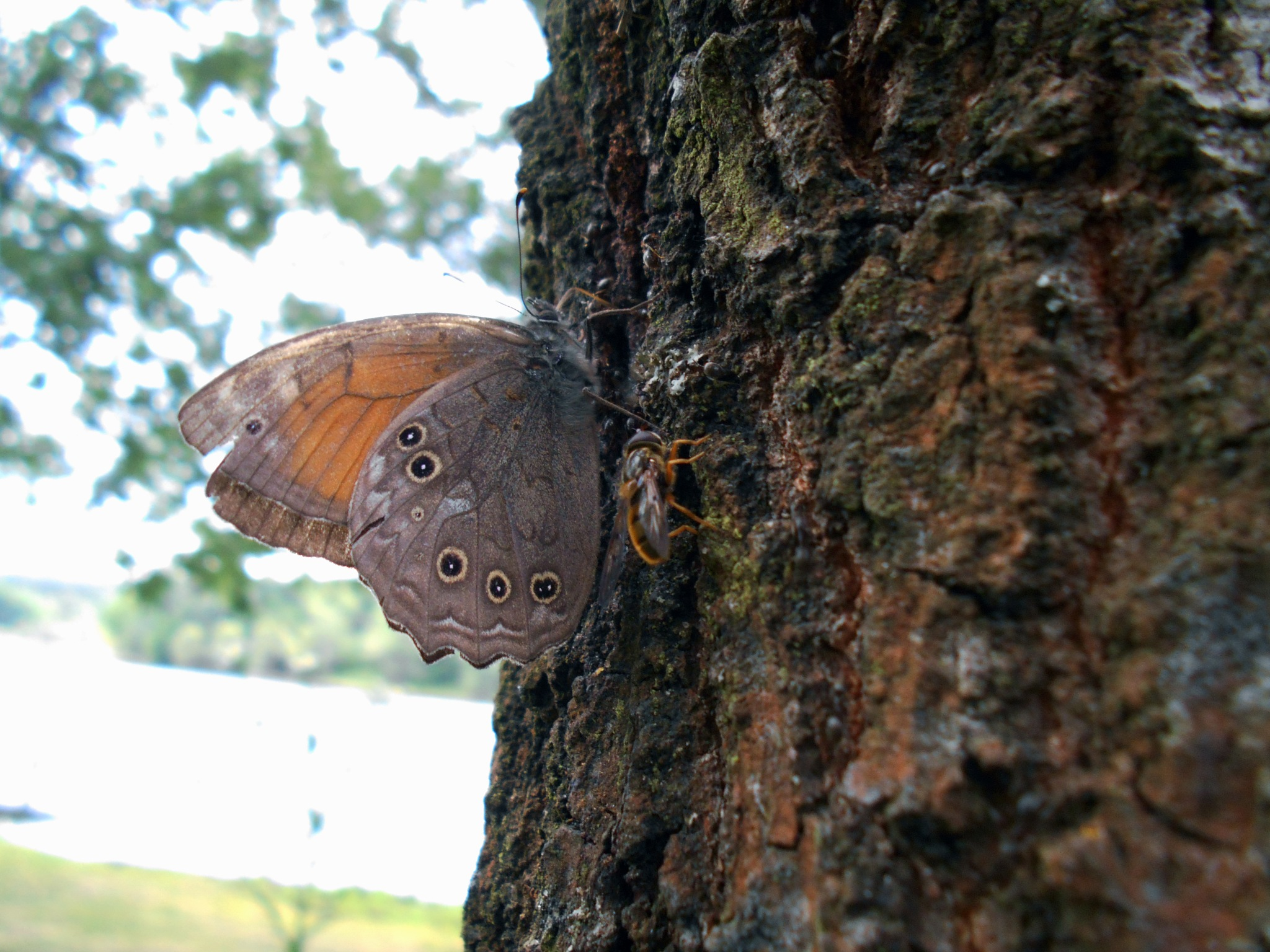 Butterflies and their friend by Paralangaj Andrea