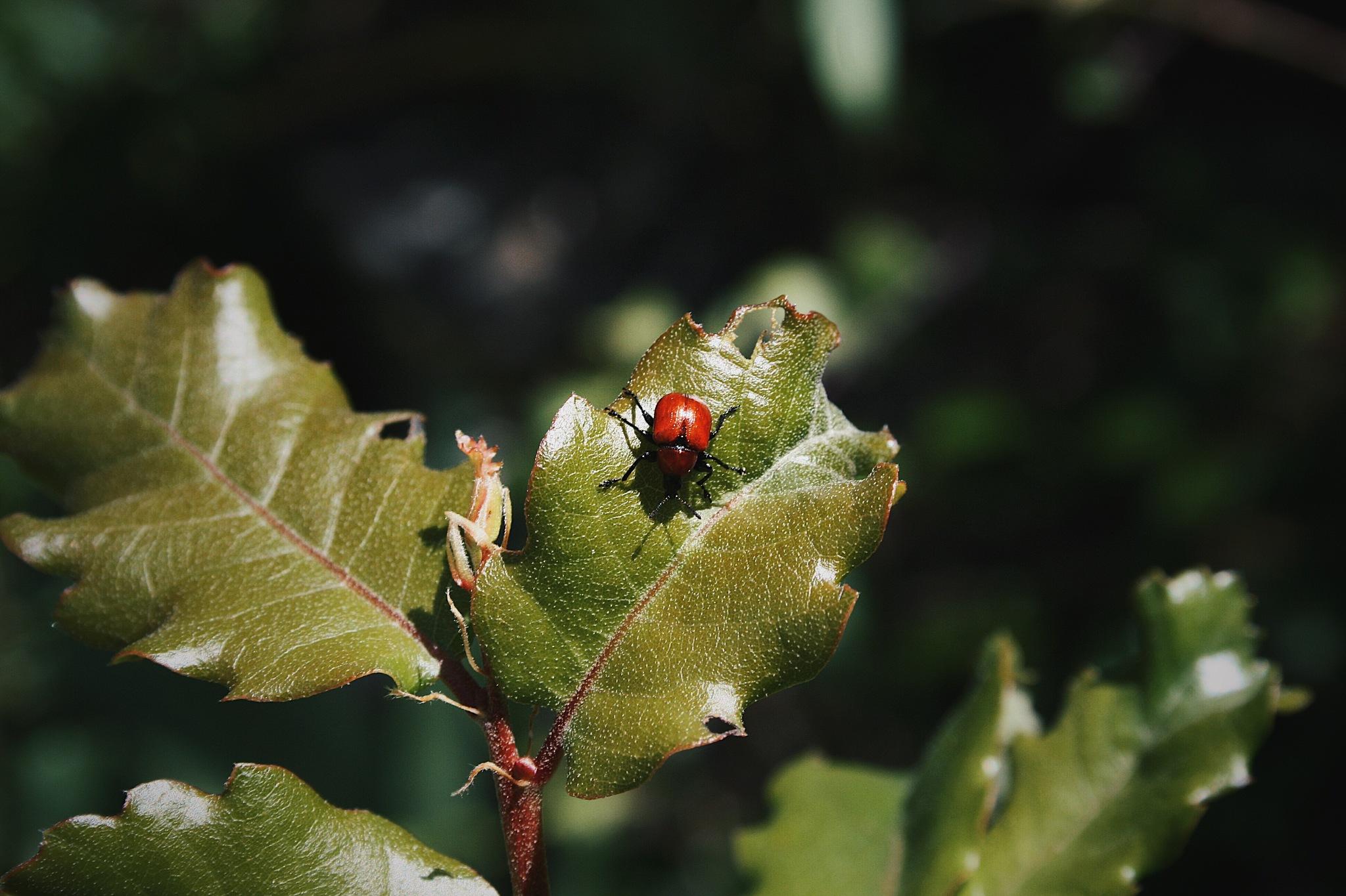 Red Bug by Itziar Álvarez Jimenez